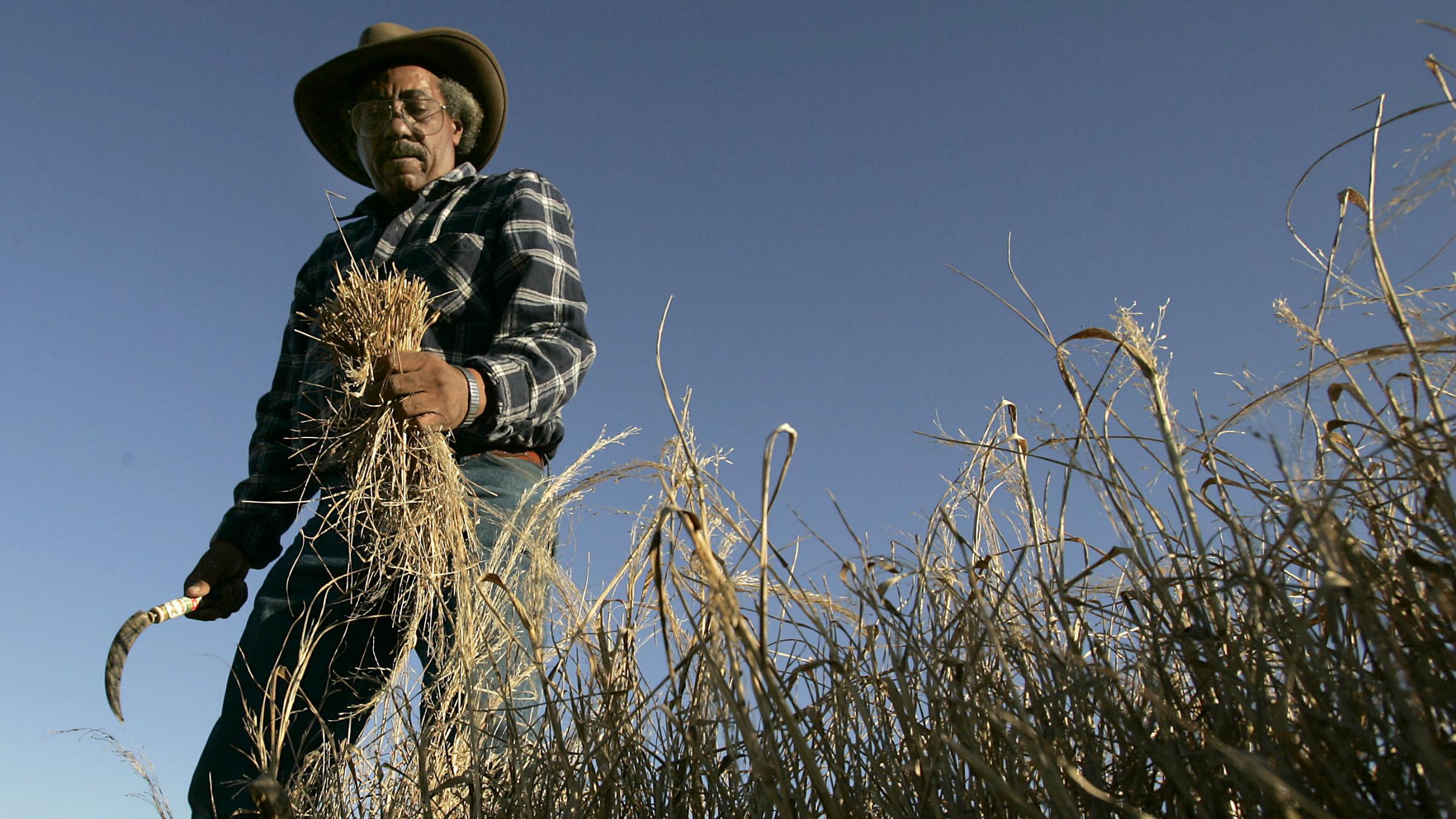 Teff farmer
