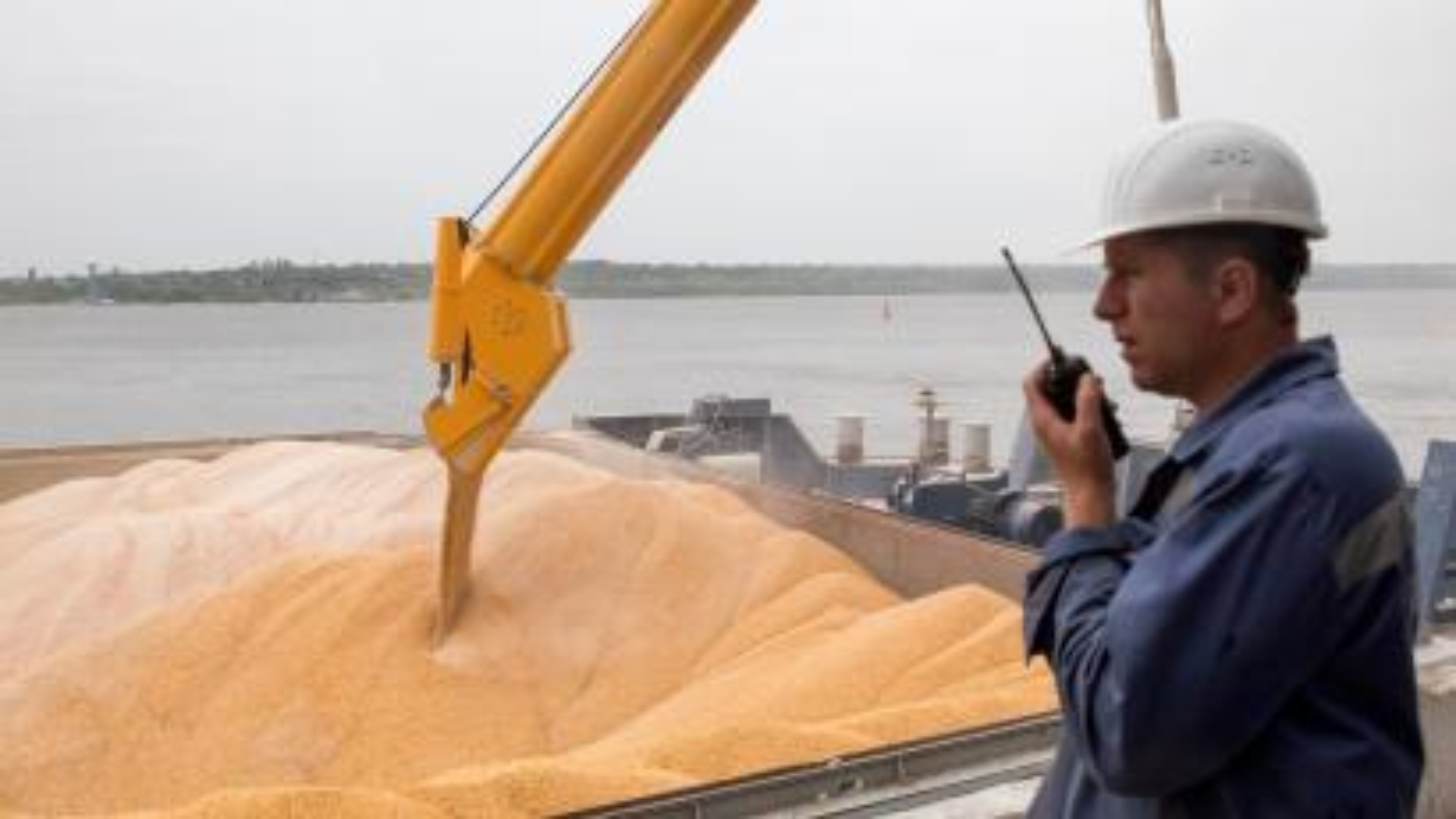 Wheat Ukraine