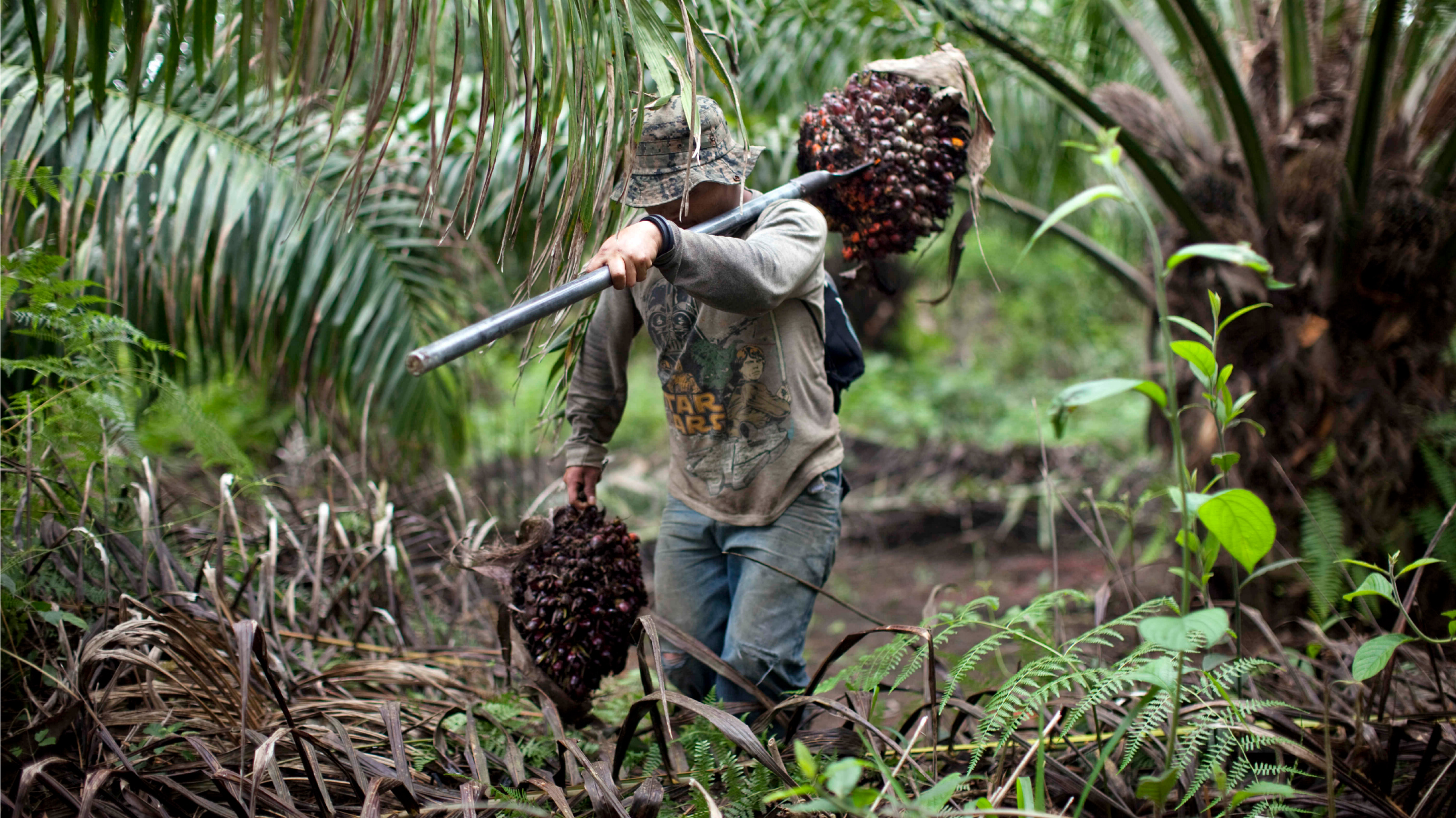Indonesian oil palm plantation workers outdoor fuck - 3 6