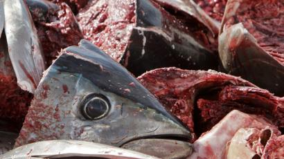 Heads of Atlantic bluefin tuna lay on a fishing vessel on the Mediterranean sea, near Garrucha, southern Spanish province of Almeria, March 25, 2010. Delegates at a conference of the 175-nation Convention on International Trade in Endangered Species (CITES) in Doha rejected a proposal to ban trade in bluefin tuna. REUTERS/Francisco Bonilla