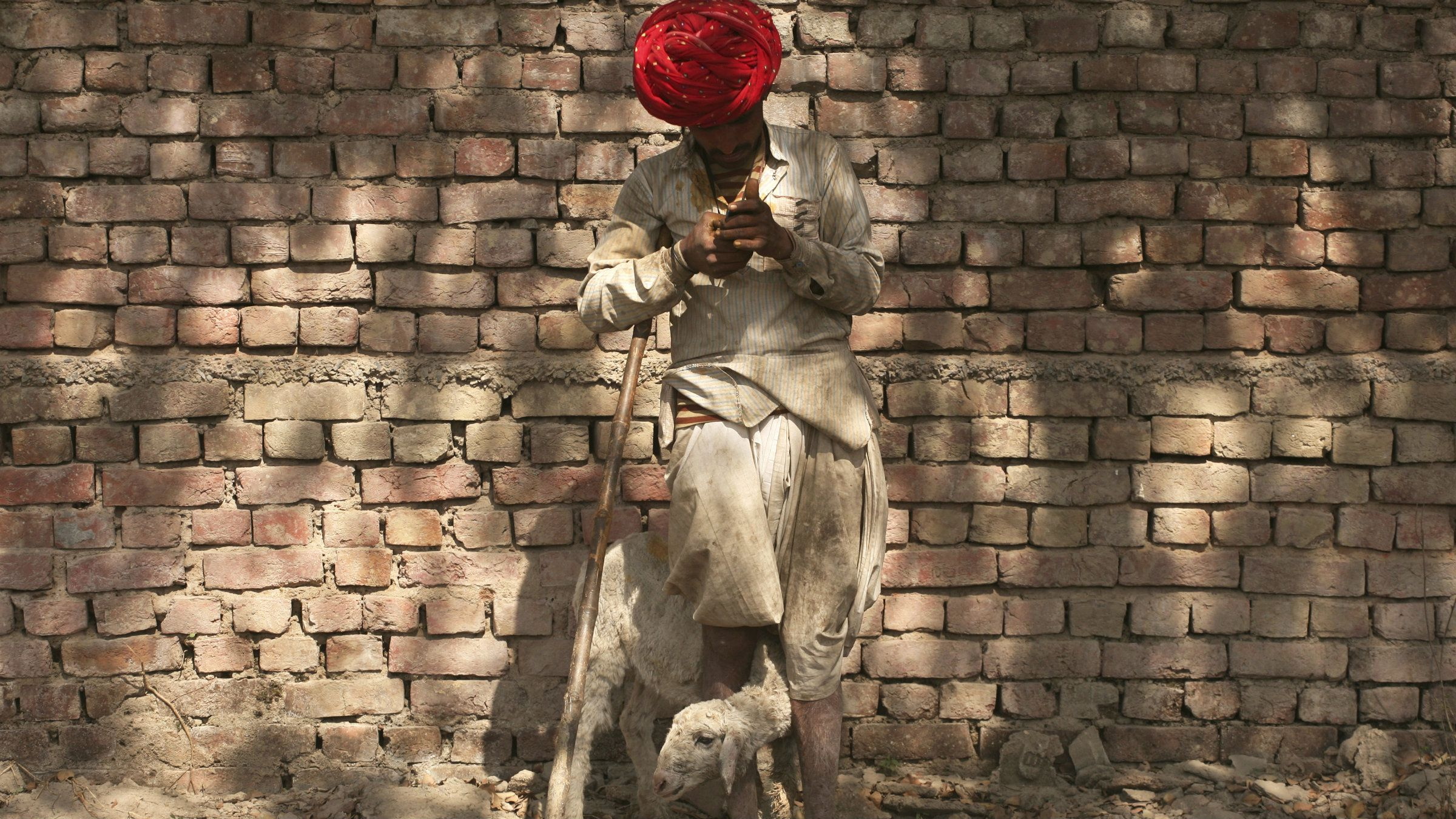 A nomadic shepherd stands with a sheep while listening to music from his mobile phone along a road in Noida on the outskirts of New Delhi