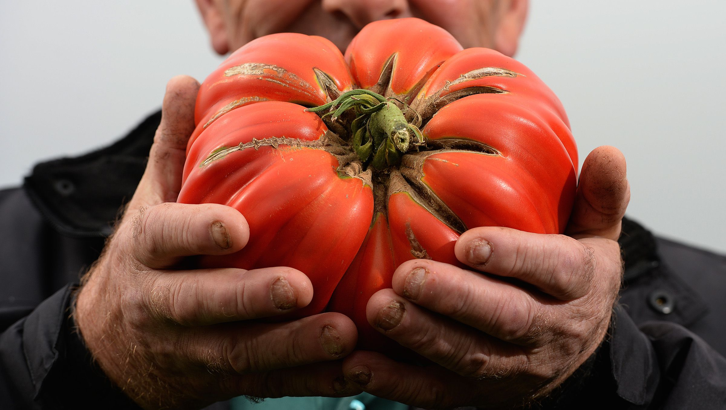 Joe Atherton of Mansfield with his first prize giant tomato weighing 2.06 kilos during the first day at the Autumn flower show in Harrogate, northern England, September 13, 2013. The annual three day event features show gardens, flower displays, giant vegetables, expert gardening and cooking advice and demonstrations REUTERS/Nigel Roddis (BRITAIN - Tags: ENVIRONMENT SOCIETY) - RTX13JQ0