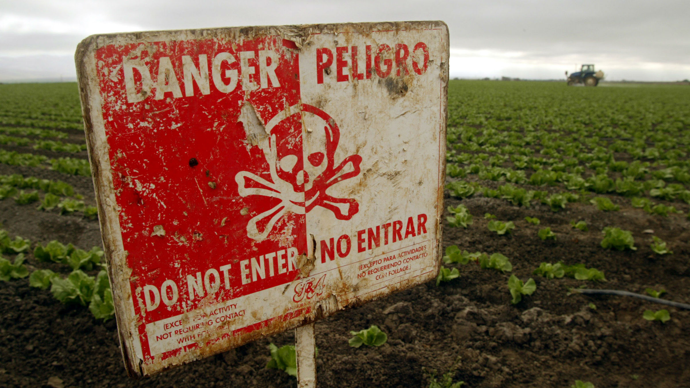 """A """"Do Not Enter"""" sign marks a field of head cabbage during the spraying of pesticides near Chualar, Calif., Monday, Sept. 16, 2002. State reports of pesticide poisonings among farmworkers are declining, but labor advocates say that tougher state laws and more enforcement are needed to adequately protect the people picking and packing crops."""