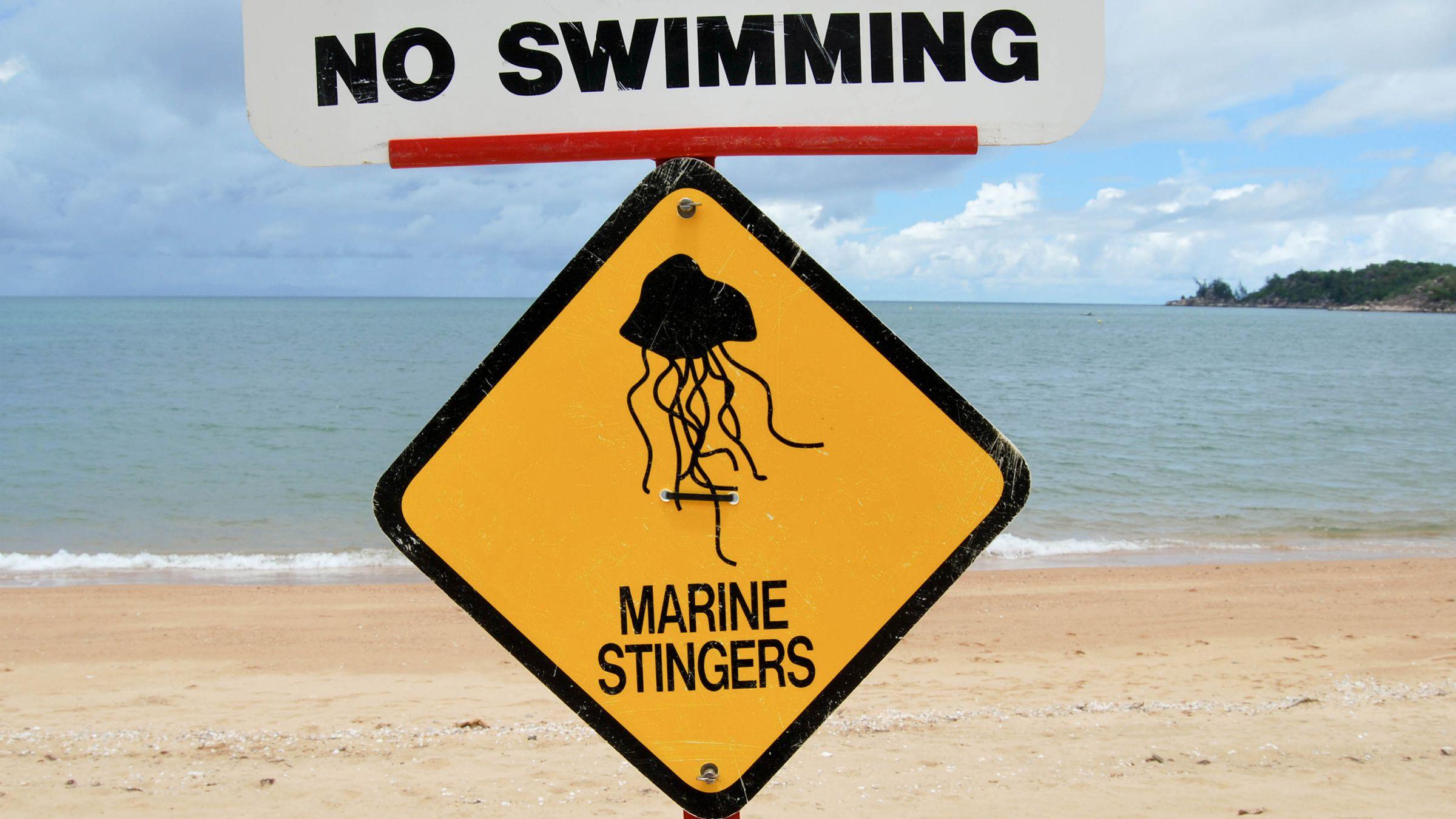 irukandji horsehead bay queensland xiaozhuli jellyfish venom venomous tourism australia