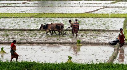 Rain-fed farms are common, but India is unique in letting bad ...