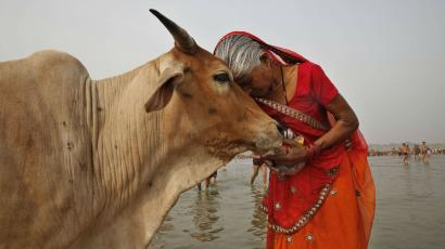 HIndu woman with cow