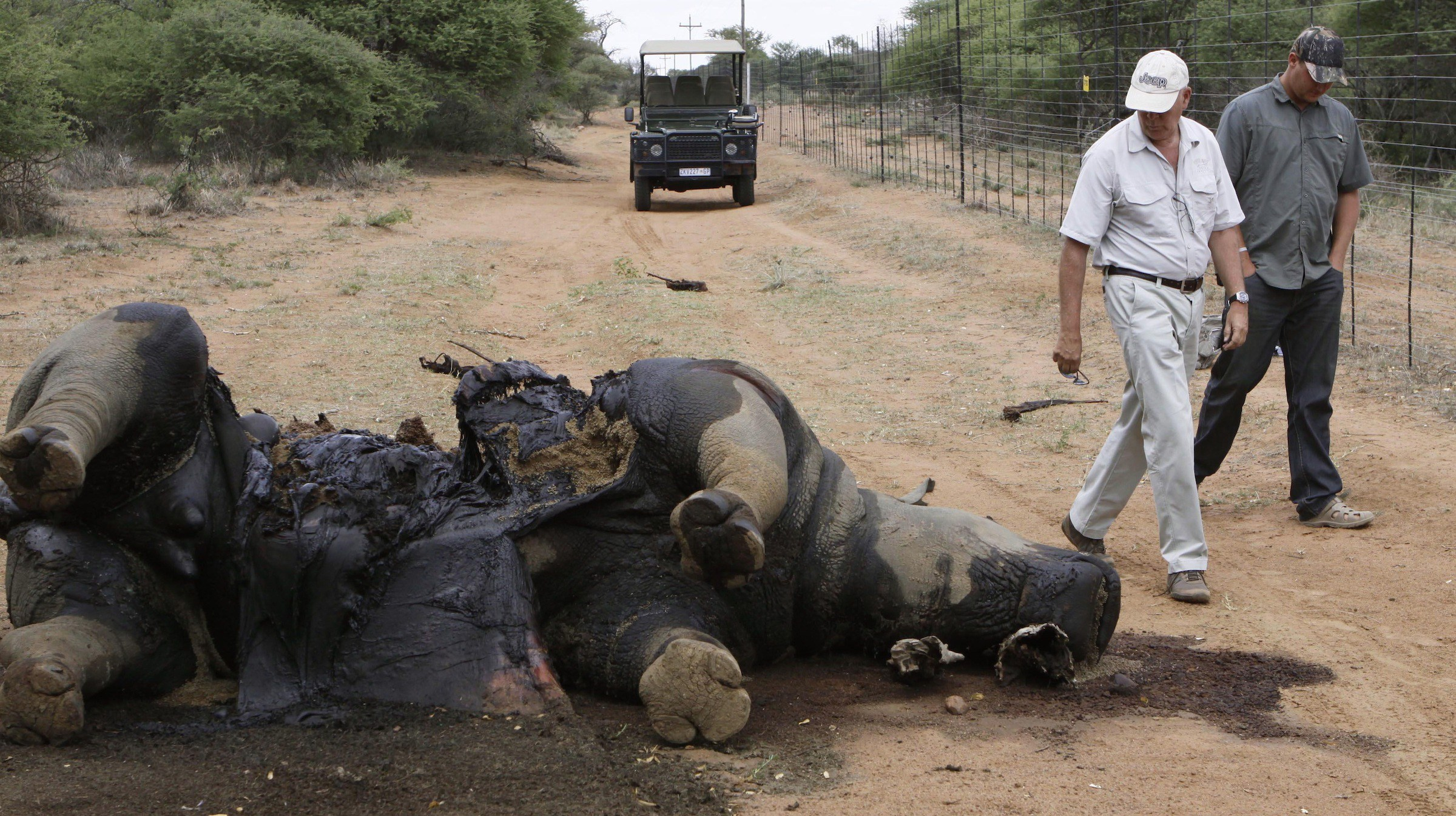 Miles Lappeman, owner of Finfoot Lake Reserve near Tantanana, South Africa, and his son Marc, right, walk past the carcass of one of eight rhino killed by poachers .