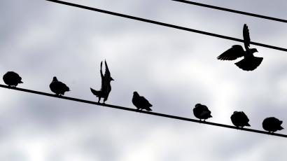 Birds perch on wires during the mild winter weather in Lancaster, N.Y., Tuesday, March 6, 2012. ()