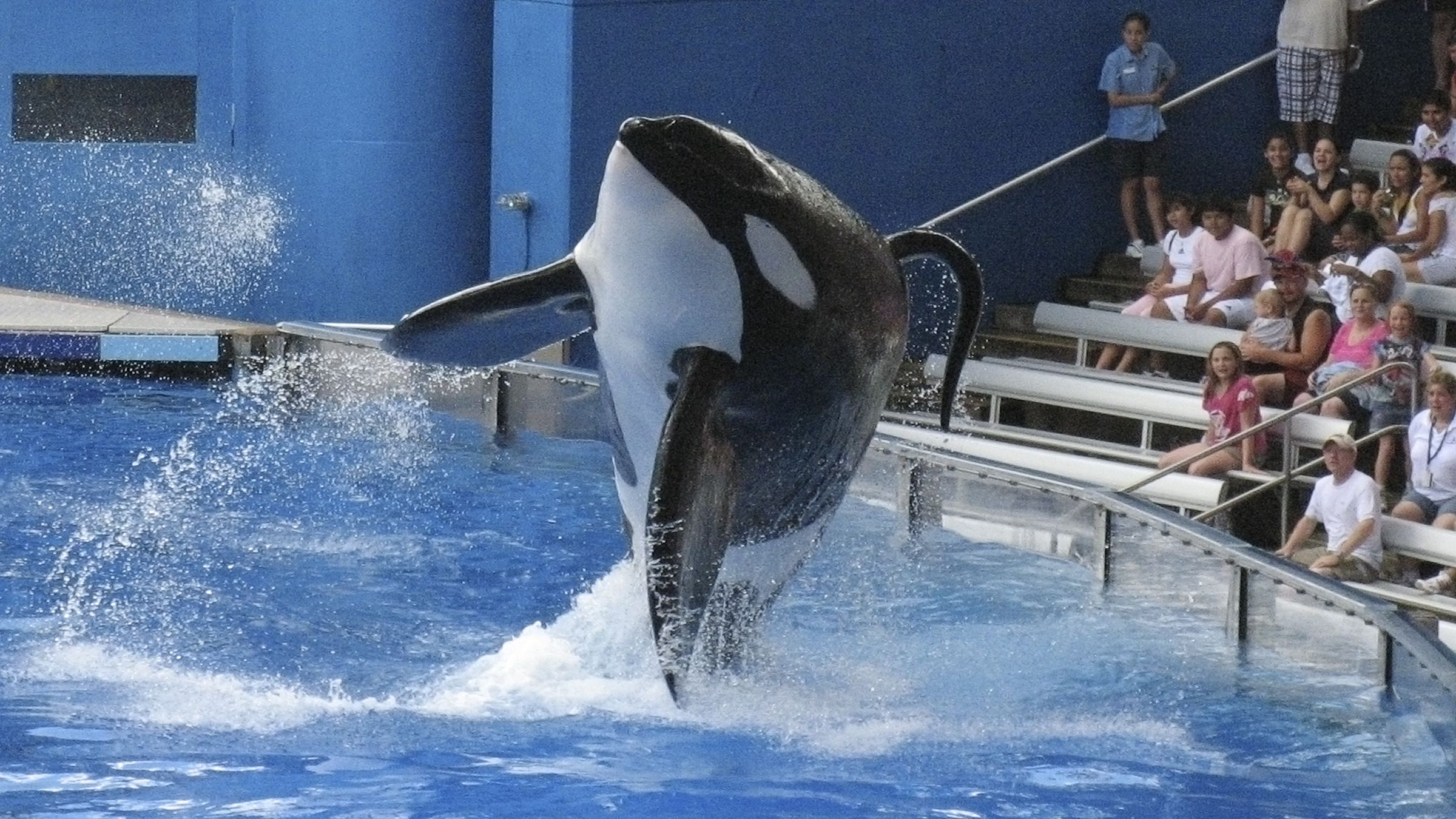 Tillikum, a killer whale at SeaWorld amusement park, performs during the show Believe, in Orlando