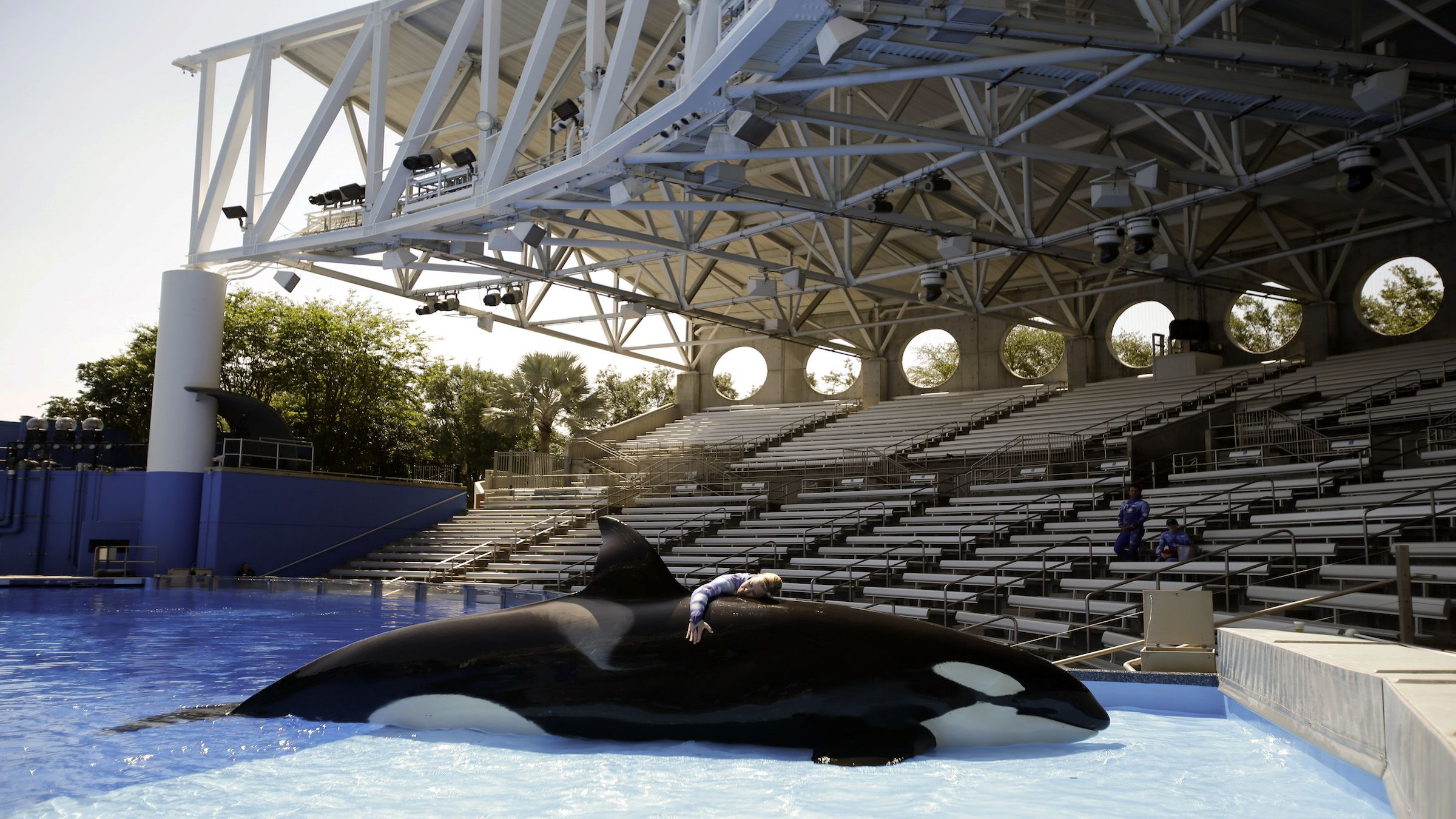 "In this April 10, 2014 photo, Sea World trainer Michelle Shoemaker hugs killer whale Kayla as she works on a routine before a show, in Orlando, Fla. SeaWorld Entertainment, Inc. has faced criticism over its treatment of its captive killer whales since the release of the highly-critical documentary, ""Blackfish,"" last year. (AP Photo/John Raoux)"