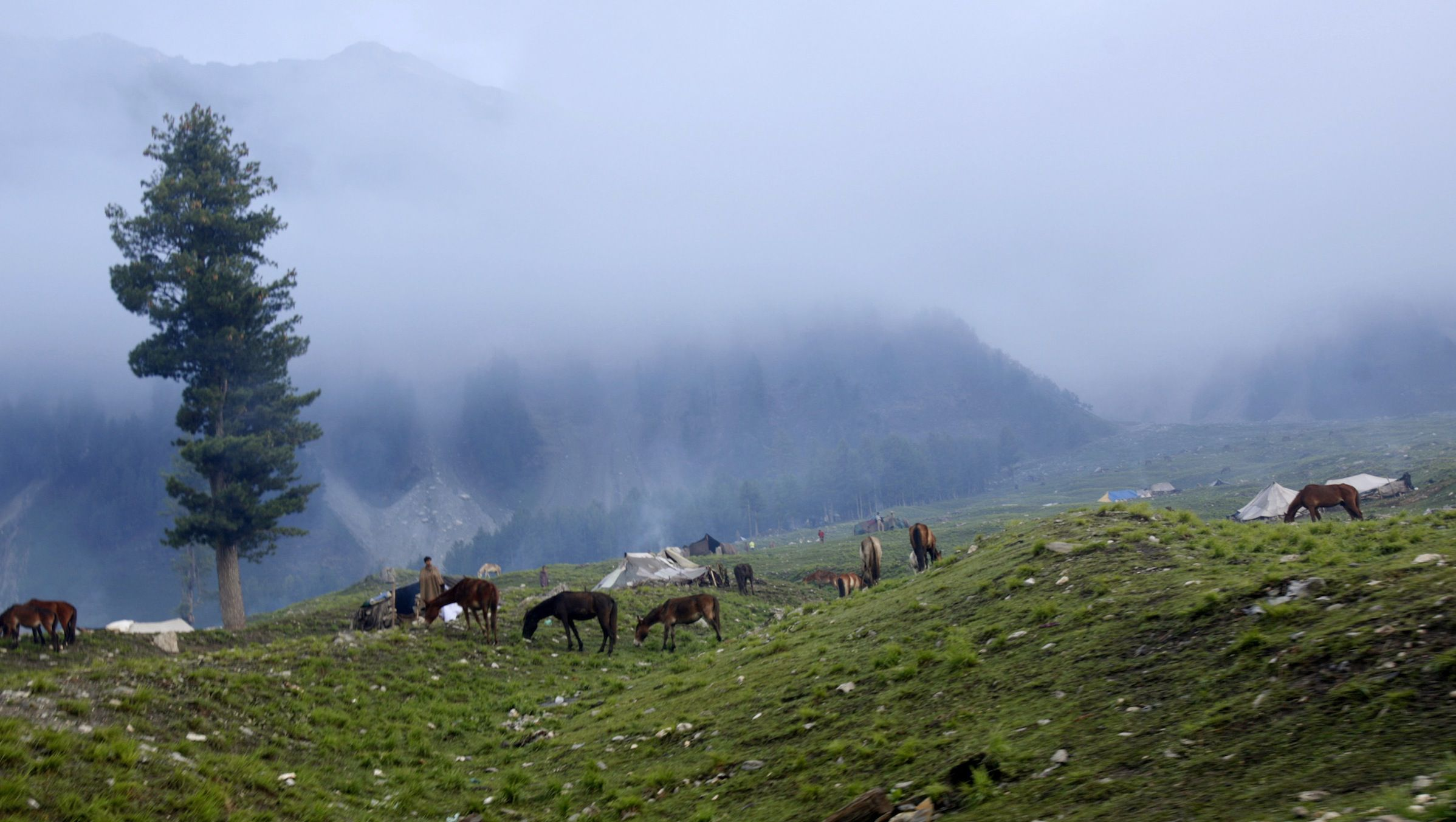 Kashmiri nomads graze their cattle at a base camp of a Hindu pilgrimage to the holy cave of Amarnath, in Baltal, 125 km (77 miles) southeast of Srinagar July 1, 2007. An ice stalagmite that forms in a Himalayan cave and is worshipped as a Hindu god has melted completely for the second year, officials said on Monday, as a pilgrimage to the site was suspended due to bad weather. Picture taken July 1, 2007.  REUTERS/Fayaz Kabli   (INDIAN ADMINISTERED KASHMIR) - RTR1RDKV