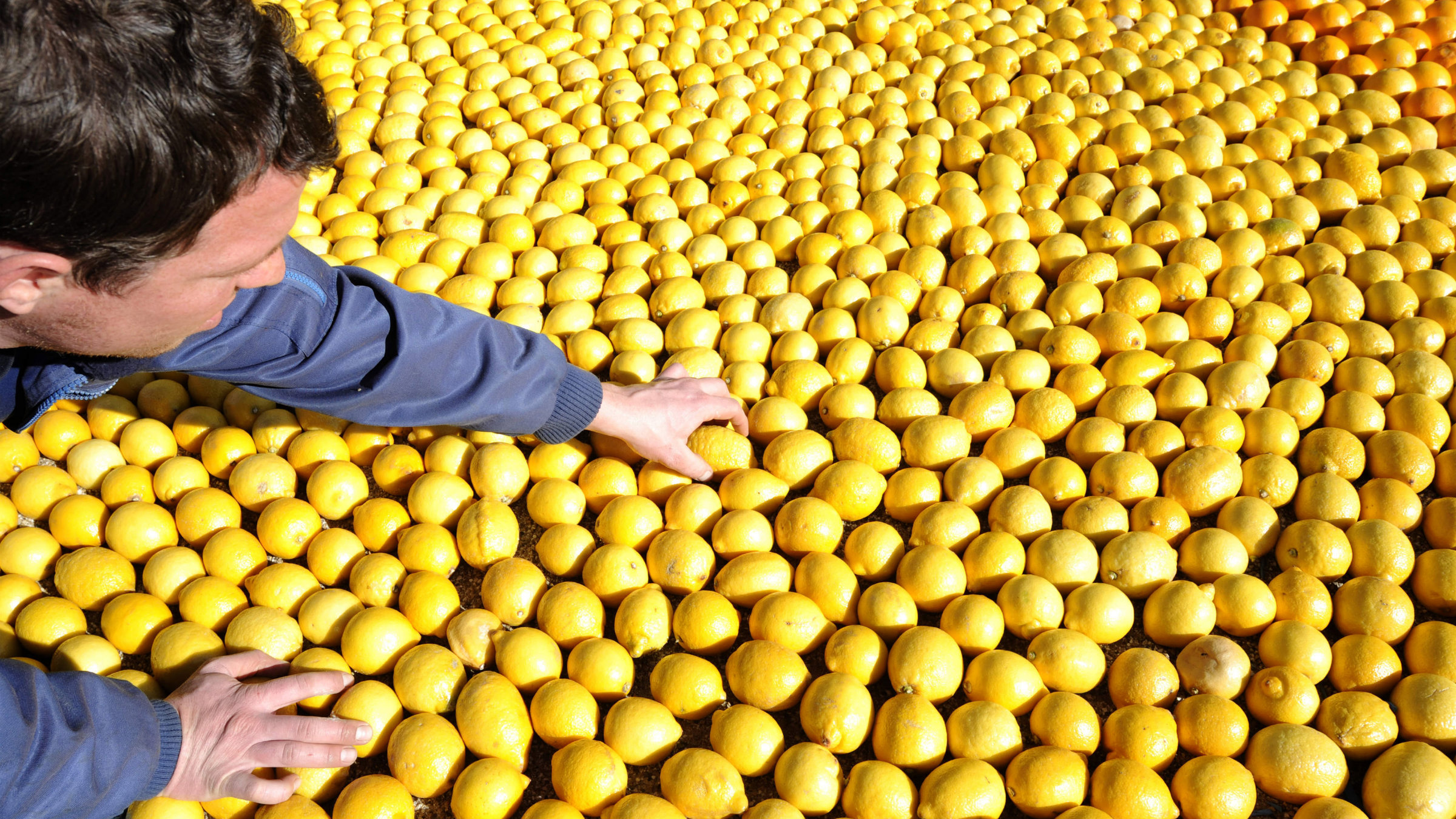 A visitor touches fruit which forms a pattern made with lemons and oranges during the Lemon Festival in Menton, southeastern France.