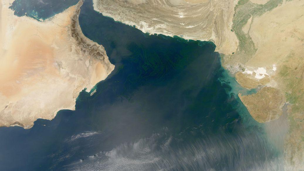algae phytoplankton plankton algal bloom dead zone carbon oxygen fishing fish fishery arabian sea