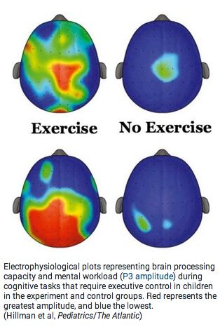 Brain activity scans
