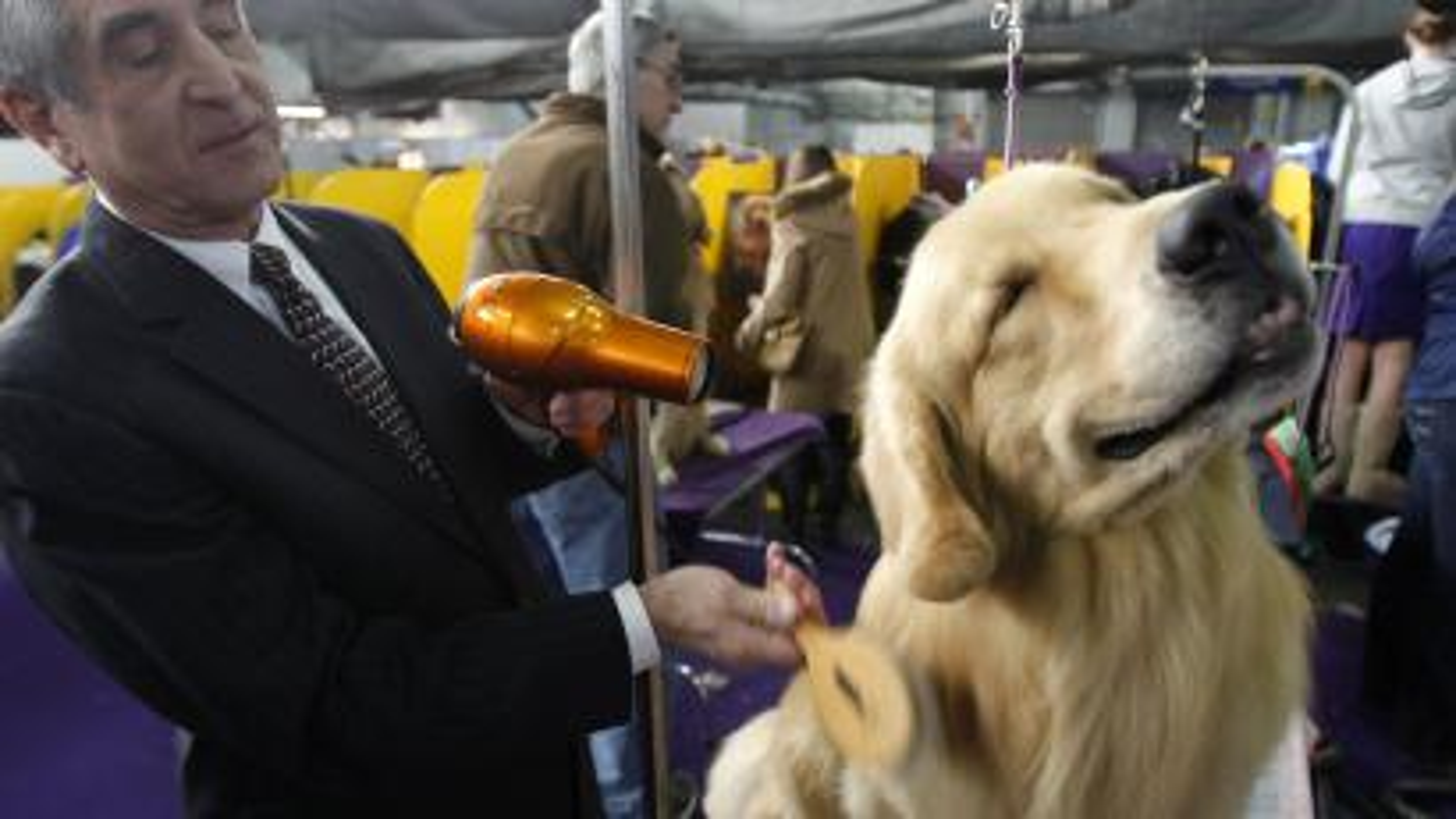 dog-optimism