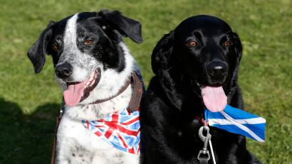 Dogs wearing a union flag and a Scottish Saltire are seen at the Birnam Highland Games in Scotland August 30, 2014. Scotland will hold a referendum on independence on September 18. REUTERS/Russell Cheyne (BRITAIN - Tags: ANIMALS POLITICS SOCIETY) - RTR44CNR