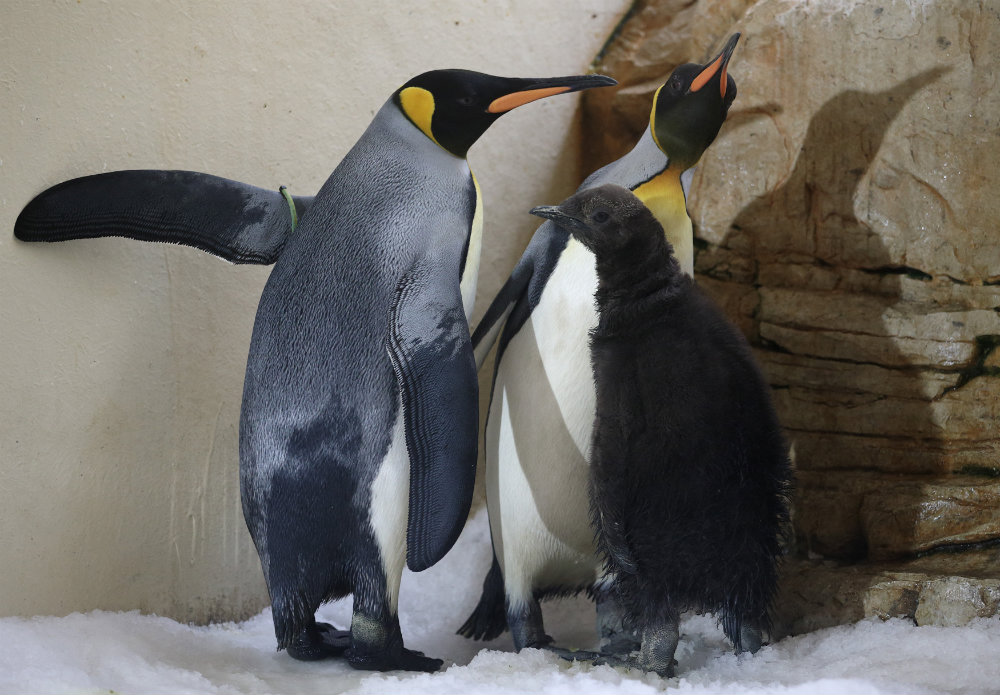 penguinfamily
