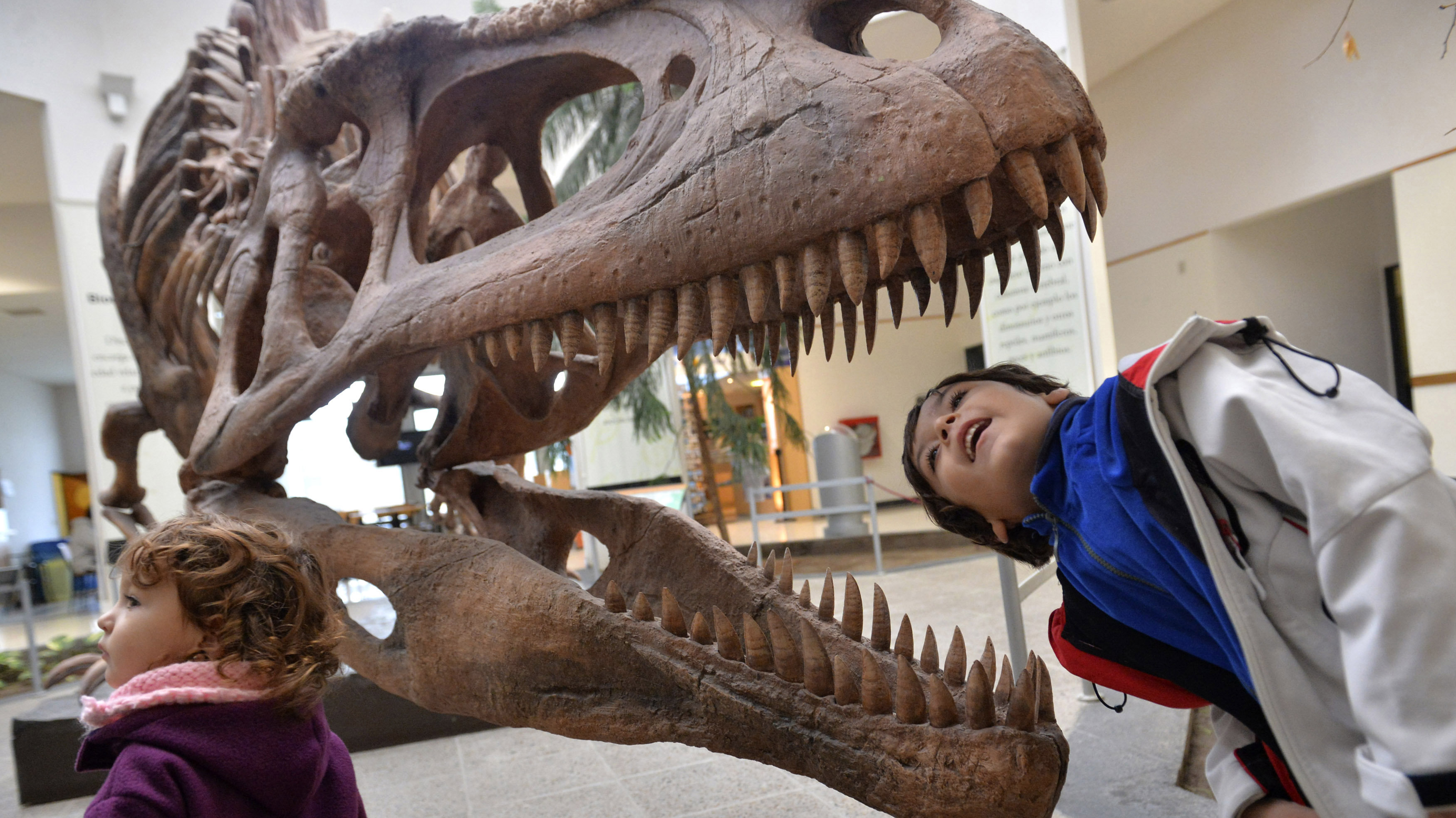 "A boy looks inside the skull a Tyrannosaurus Rex replica at the Egidio Feruglio Museum in the Argentina's Patagonian city of Trelew, May 18, 2014. About 200 fossils belonging to at least seven animals were found in an area located in the Patagonian province of Chubut. Jose Luis Carballido, a palaeontologist at the Museo Egidio Feruglio, believes what has been recovered only constitutes of ""20 percent"" of the material that might found at the location."