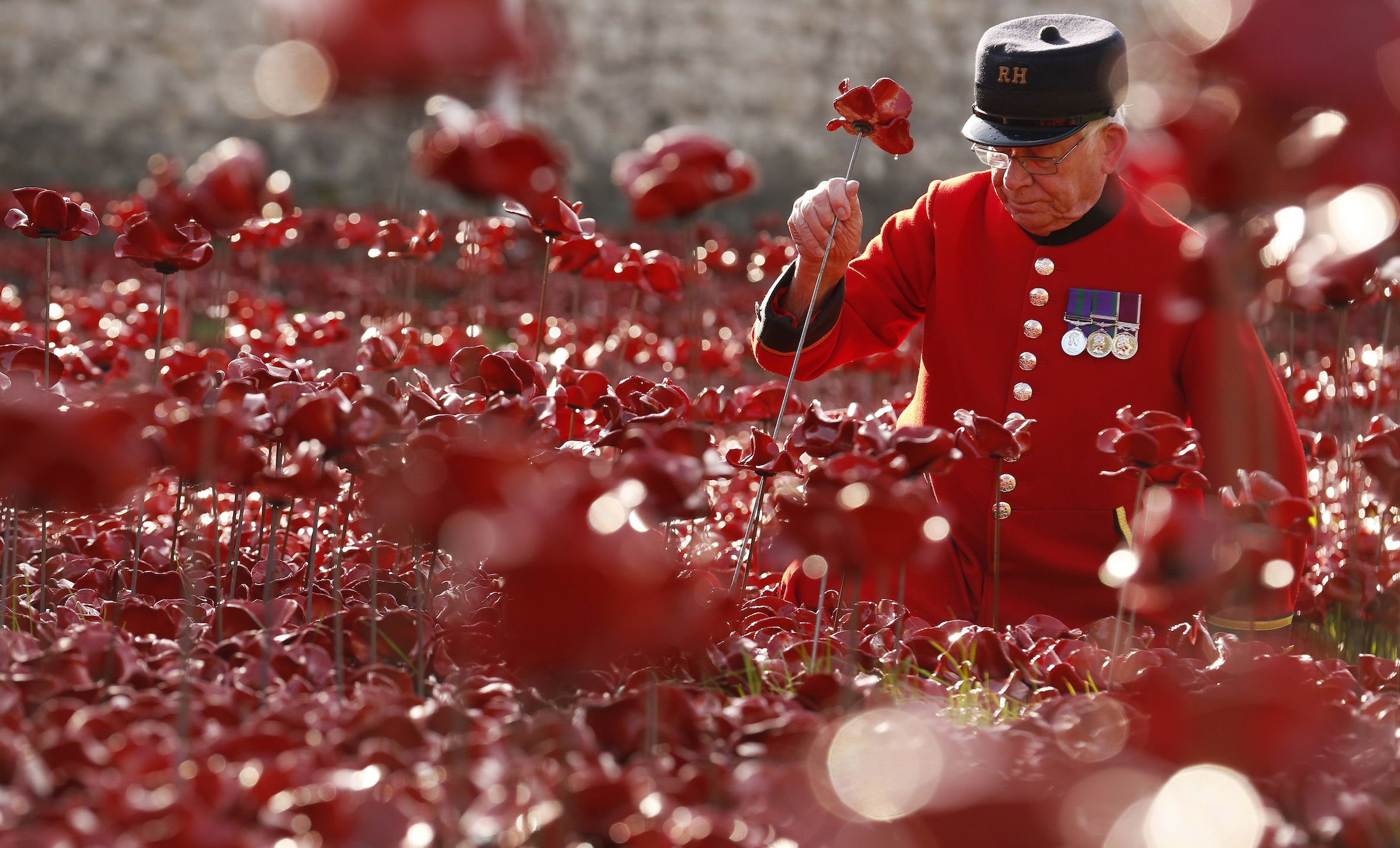 """Chelsea Pensioner Albert Willis plants a ceramic poppy amongst other poppies that form part of the art installation called """"Blood Swept Lands and Seas of Red"""" at the Tower of London October 9, 2014. The evolving art installation, which will be completed on November 11, will create a commemoration for the centenary of World War One. REUTERS/Luke MacGregor (BRITAIN - Tags: MILITARY SOCIETY TRAVEL ANNIVERSARY TPX IMAGES OF THE DAY) - RTR49IS2"""
