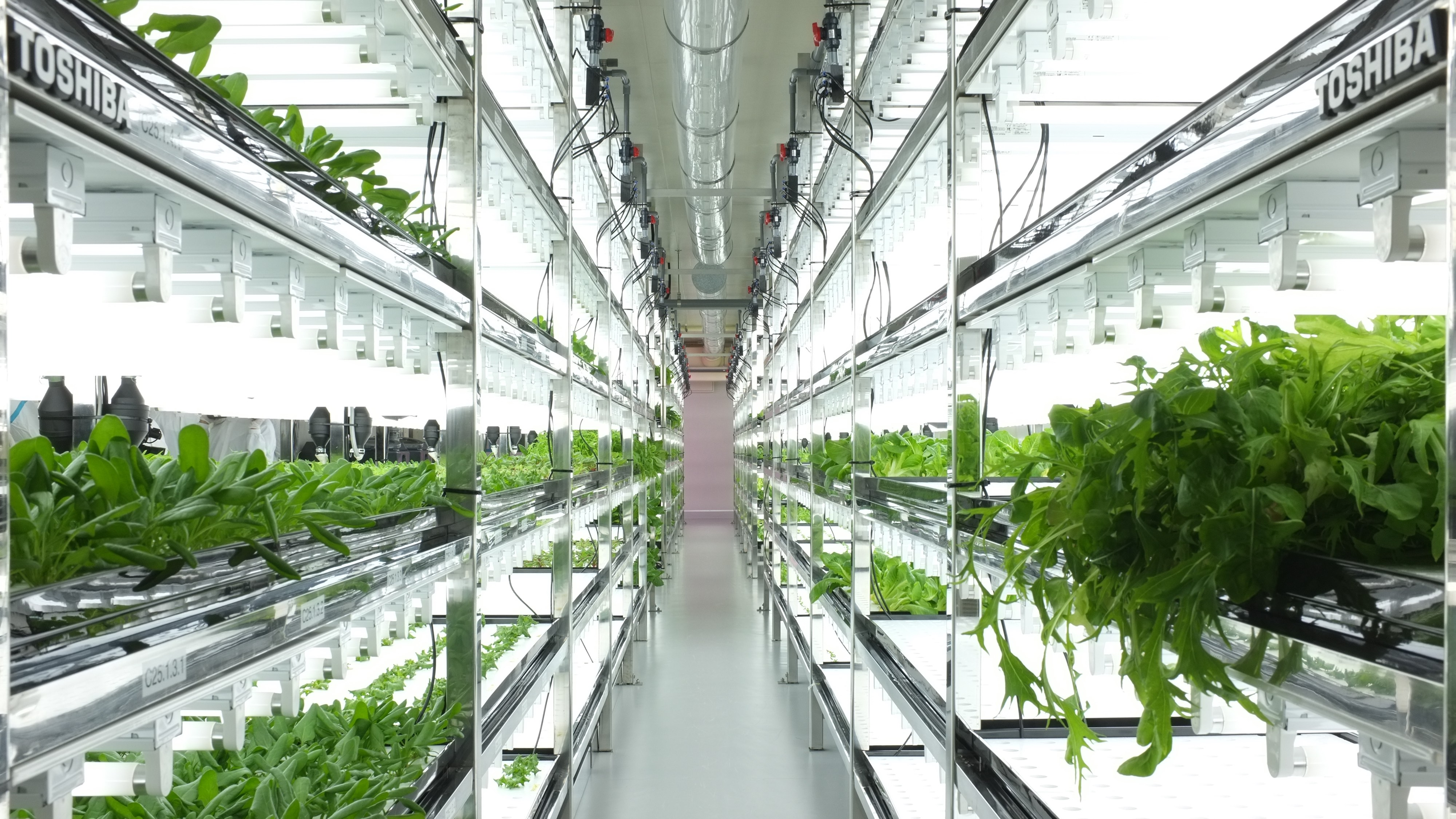 Toshiba indoor farm & Toshiba\u0027s high-tech grow rooms are churning out lettuce that never ...