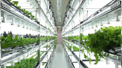 Toshiba indoor farm