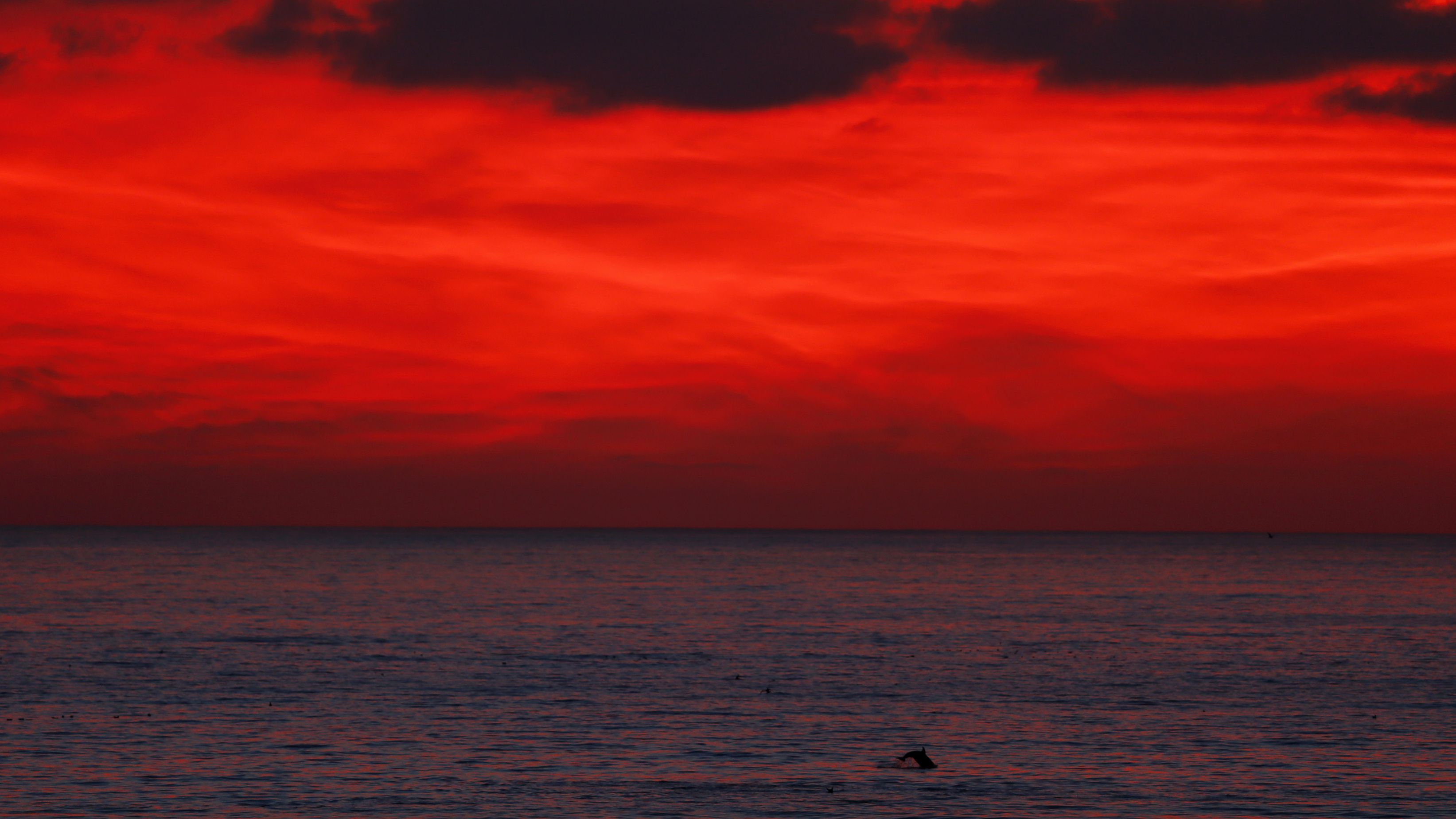 A dolphin jumps from the water off the coast of Leucadia, California after sun set December 13, 2013. REUTERS/Mike Blake