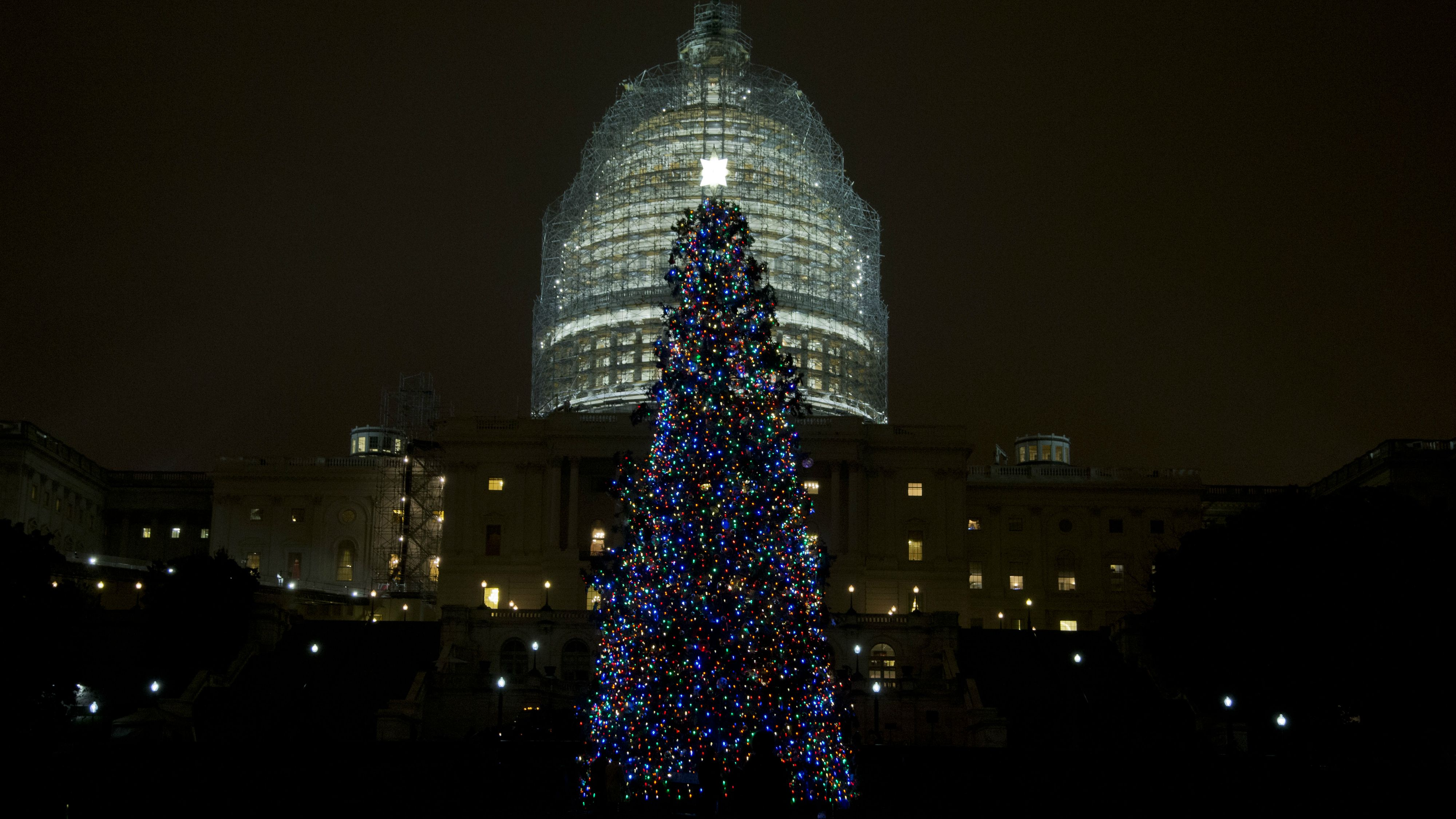 The U.S. Capitol Christmas tree stands after being lit by House Speaker John Boehner and Make-A-Wish Foundation recipient Aaron Urban, 10, from Linthicum, Md., on the West Front of the Capitol in Washington Tuesday, Dec. 2, 2014. The 2014 U.S. Capitol Christmas Tree is an 88-foot white spruce from the Chippewea National Forest in Cass Lake, Minn. (AP Photo/Manuel Balce Ceneta)