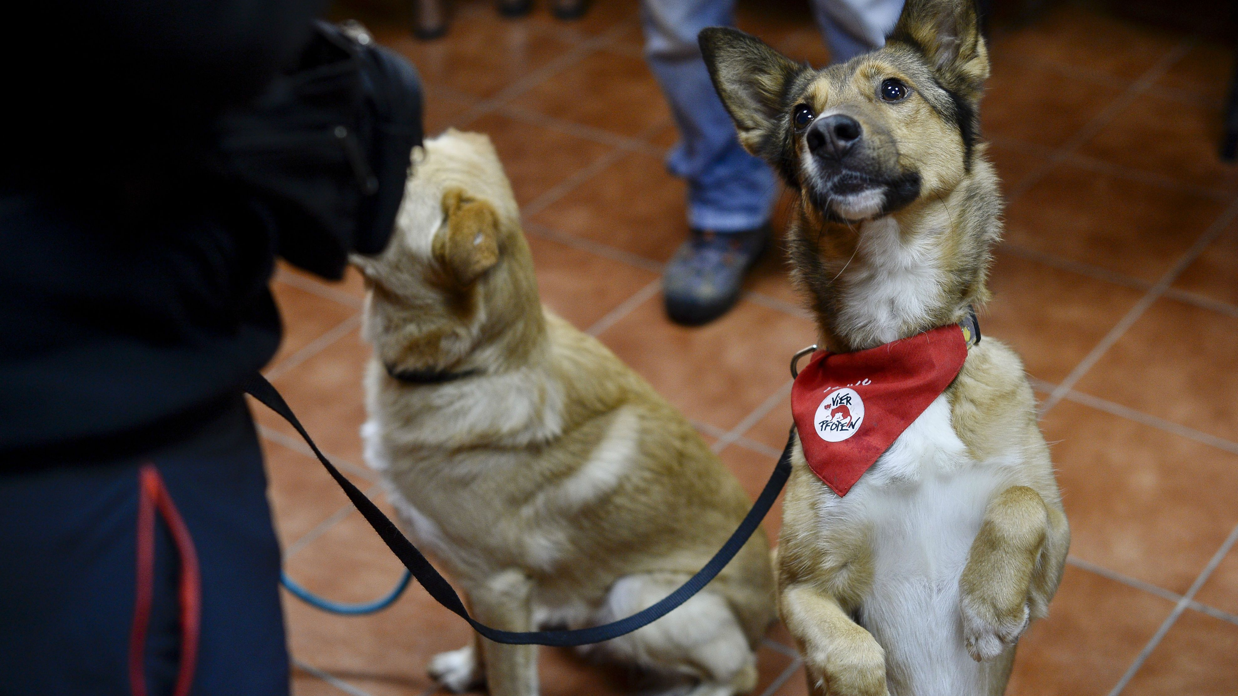 Pope Francis Says All Pets Go To Heaven But What Do Other Religions Say Quartz