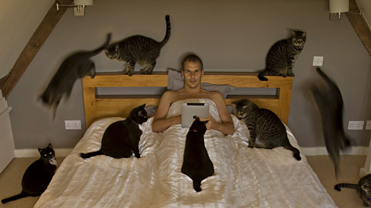 Better than Cats (a short story)
