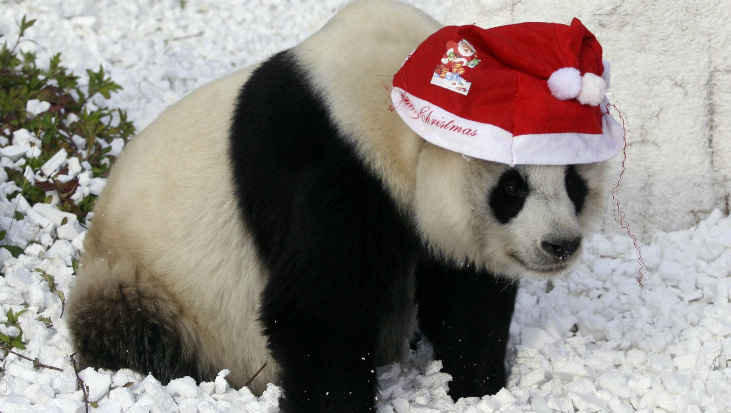 новогодние картинки с пандами инструментов его освоению