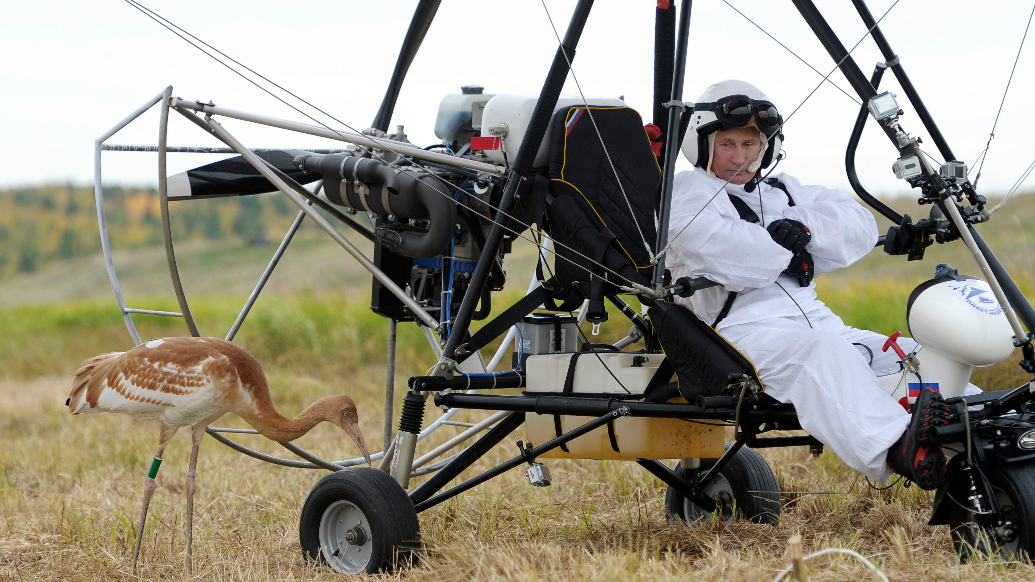 Russian President Vladimir Putin looks at a crane as he sits in a motorised deltaplane at Yamalo-Nenets district September 5, 2012.