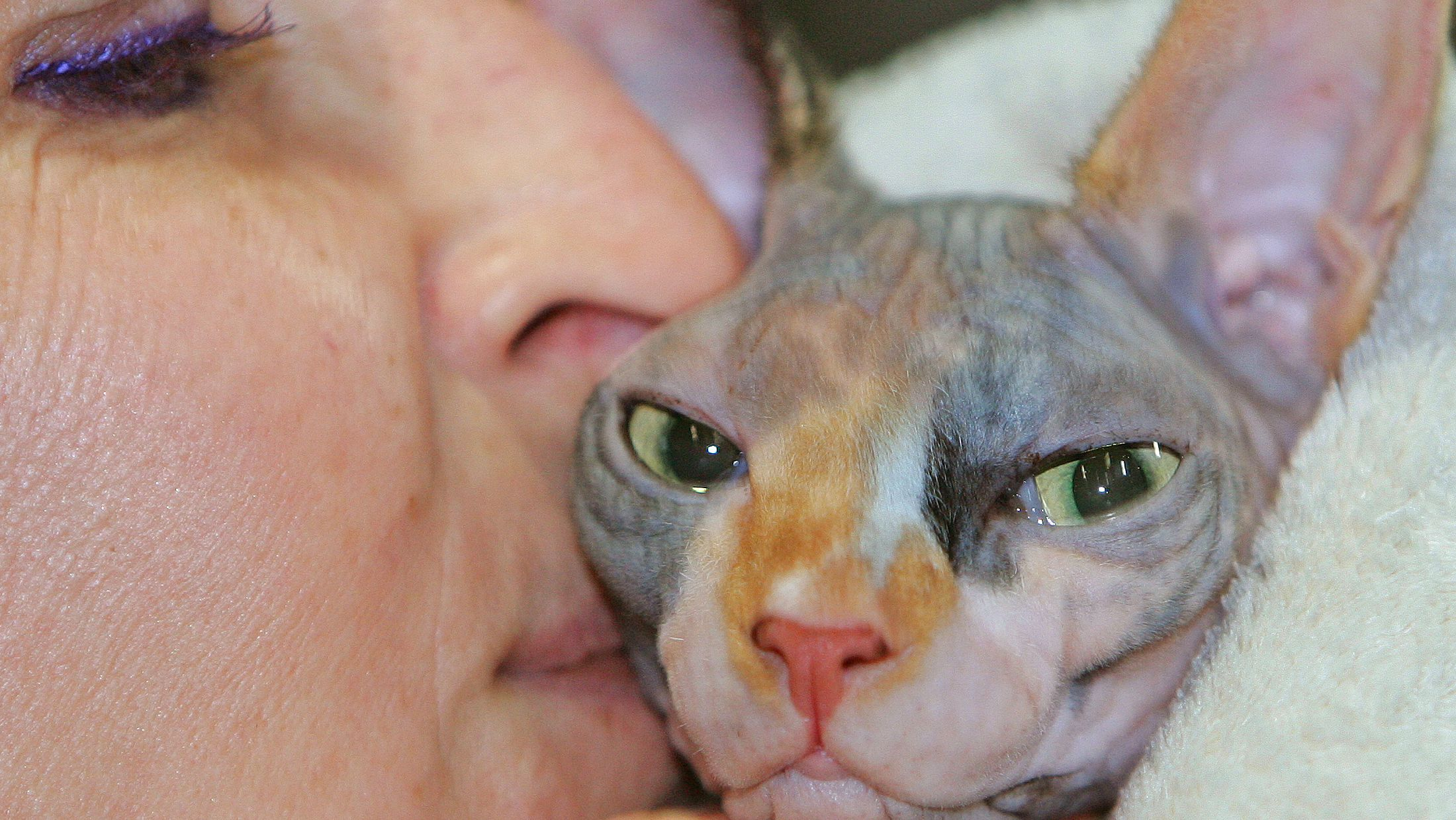 A seven-month Sphinx cat named Yvette receives a kiss from her owner during an international feline beauty contest in Brussels February 5, 2006. The contest took place with an exhibition of the cutest cats from all over Europe. REUTERS/Yves Herman