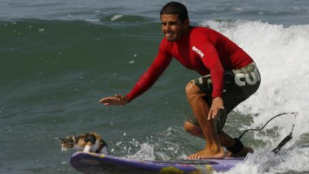 Peruvian surfer Domingo Pianezzi rides a wave accompanied by a cat named Nicolasa at the San Bartolo beach in Lima January 31, 2008. REUTERS/Pilar Olivares