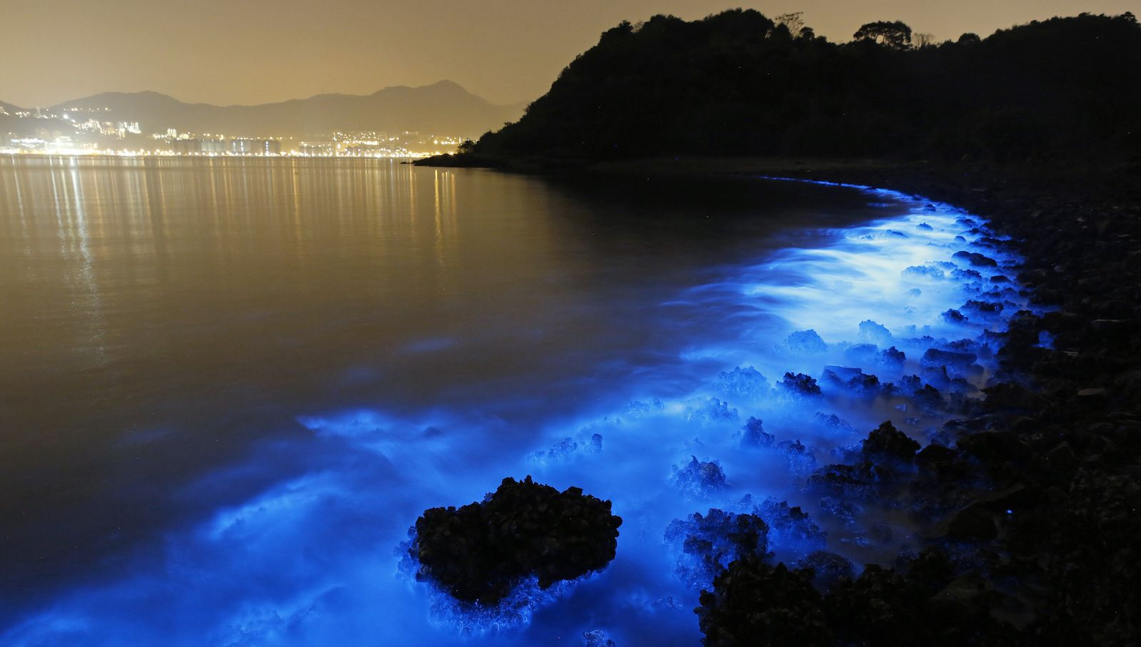 This Thursday, Jan. 22, 2015 photo made with a long exposure shows the glow from a Noctiluca scintillans algal bloom along the seashore in Hong Kong. The luminescence, also called Sea Sparkle, is triggered by farm pollution that can be devastating to marine life and local fisheries, according to University of Georgia oceanographer Samantha Joye. Noctiluca itself does not produce neurotoxins like other similar organisms do. But its role as both prey and predator tends can eventually magnify the accumulation of toxins in the food chain, according to R. Eugene Turner at Louisiana State University. (AP Photo/Kin Cheung