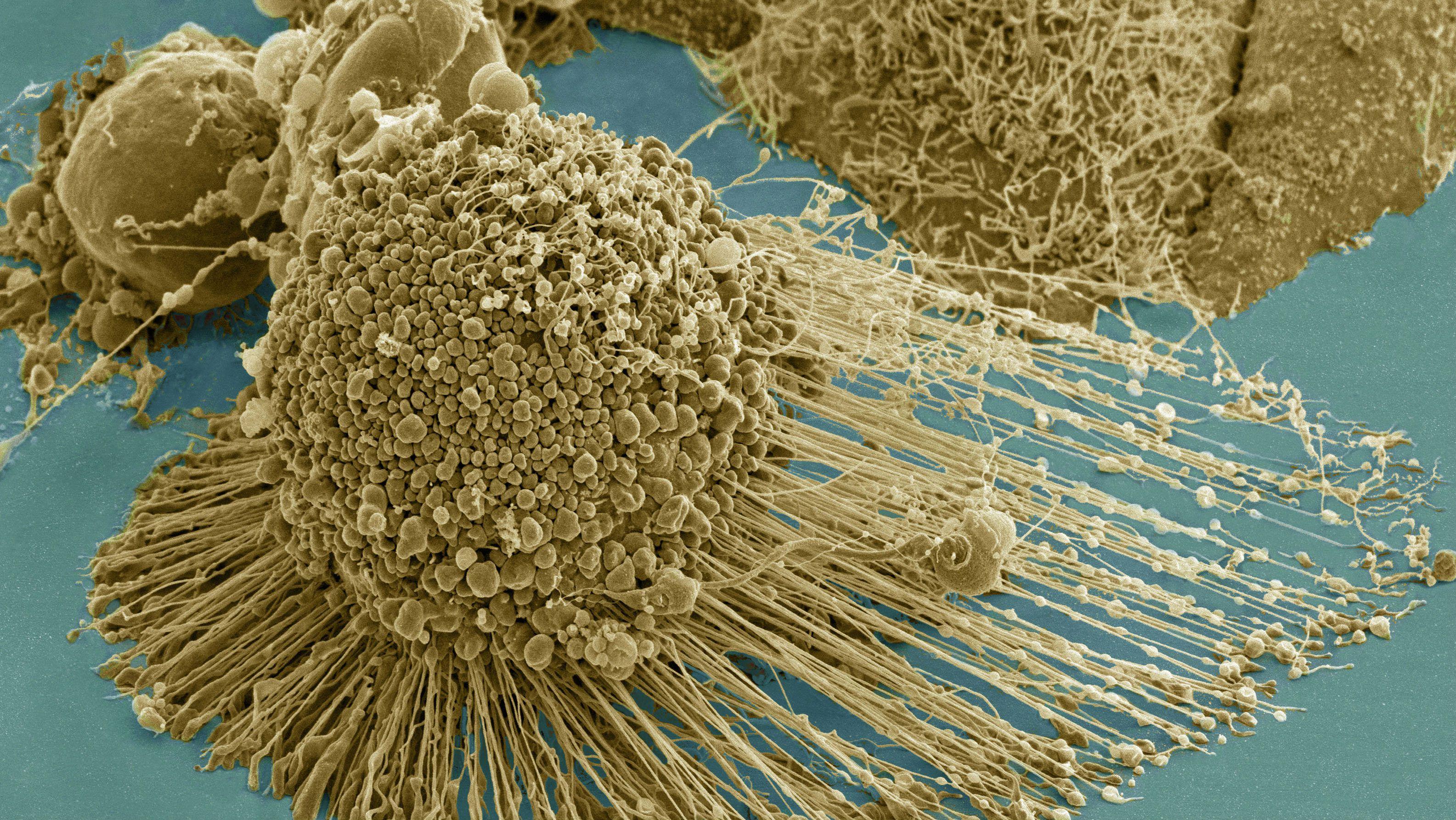 mutatil-cell