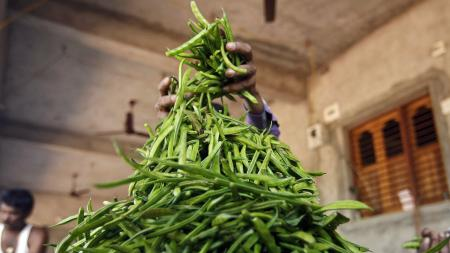 A farmer makes a heap of guar to sort them at Chiloda village in the western Indian state of Gujarat November 22, 2014. Farmers worry that oil firms a world away in the United States will buy less of their guar in future, ending a short-lived boom that helped Indian farmers out of poverty.