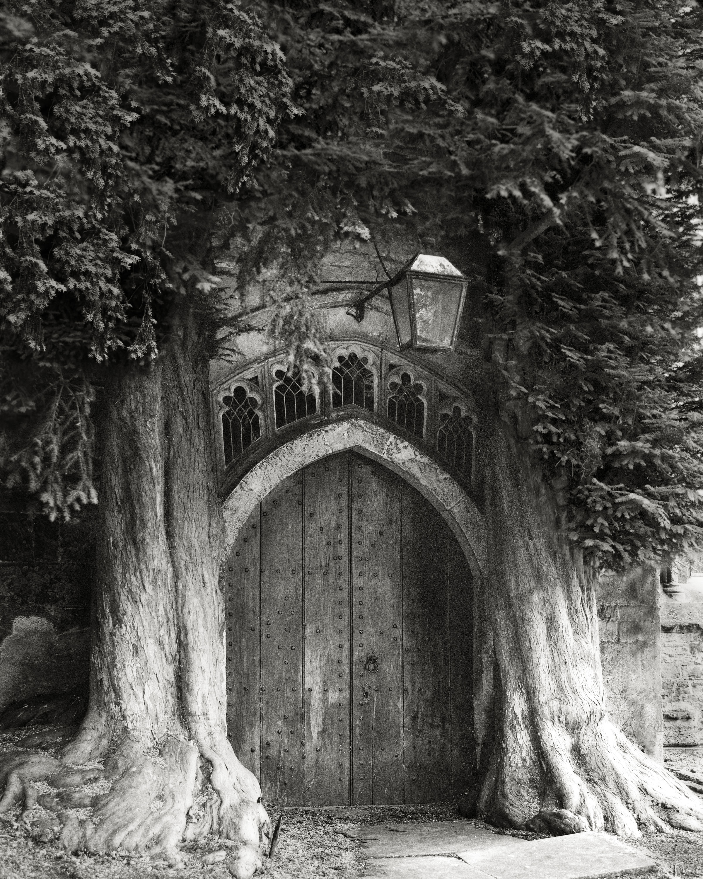 The Sentinels of St Edwards-beth-moon-ancient-trees