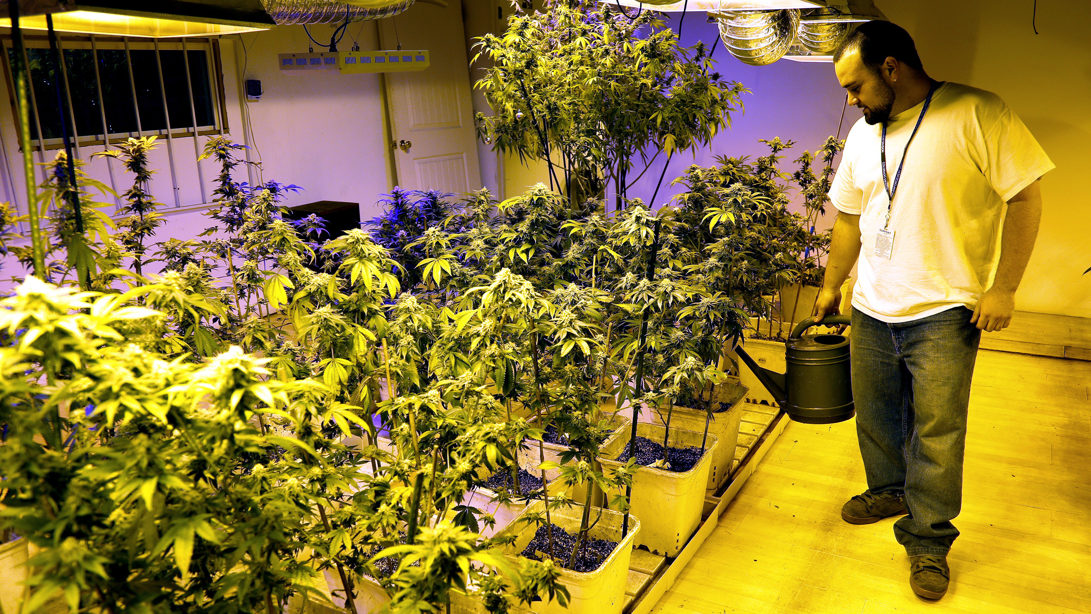 Joe Rey, a grower at 3D Cannabis Center, waters marijuana plants at the company facility in Denver December 31, 2013. Proprietors of the first marijuana retailers licensed to sell pot for recreational use in Colorado, including 3D, were busy rolling joints and stocking shelves with their leafy merchandise on Tuesday, ahead of a New Year's Day grand opening that marks a new chapter in America's drug culture.  REUTERS/Rick Wilking (UNITED STATES - Tags: BUSINESS SOCIETY POLITICS DRUGS) - RTX16YCD