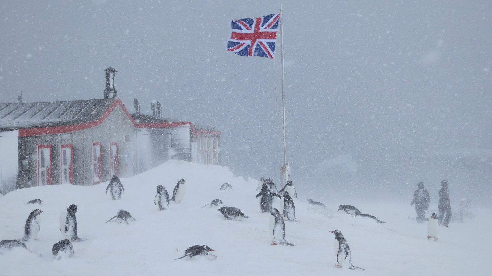 Bransfield House on a snowy cold day, with Union flag flying, visitors and gentoo penguins.