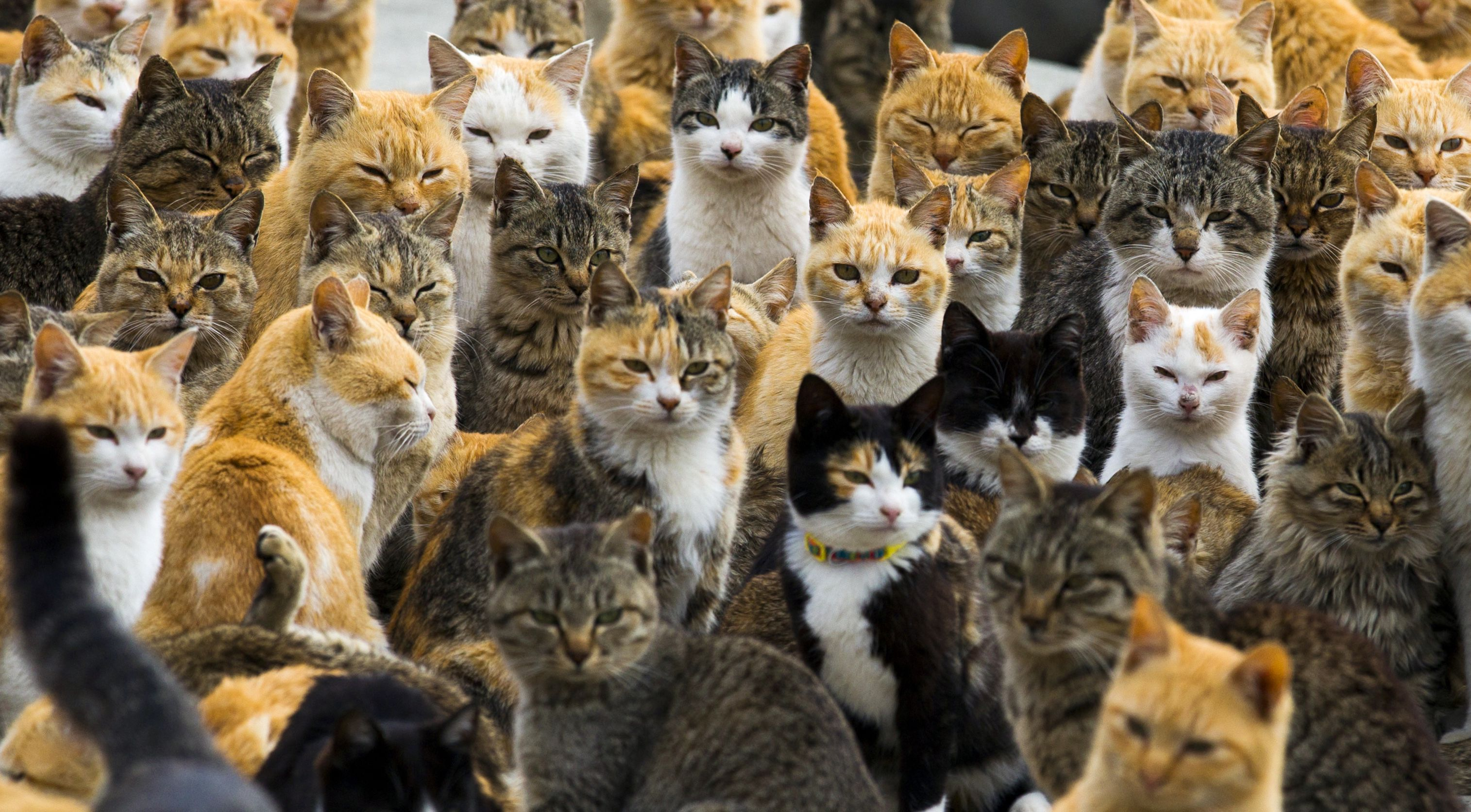 Cats crowd the harbour on Aoshima Island in the Ehime prefecture in southern Japan February 25, 2015. An army of cats rules the remote island in southern Japan, curling up in abandoned houses or strutting about in a fishing village that is overrun with felines outnumbering humans six to one. Picture taken February 25, 2015. To match story JAPAN-CATS/ REUTERS/Thomas Peter