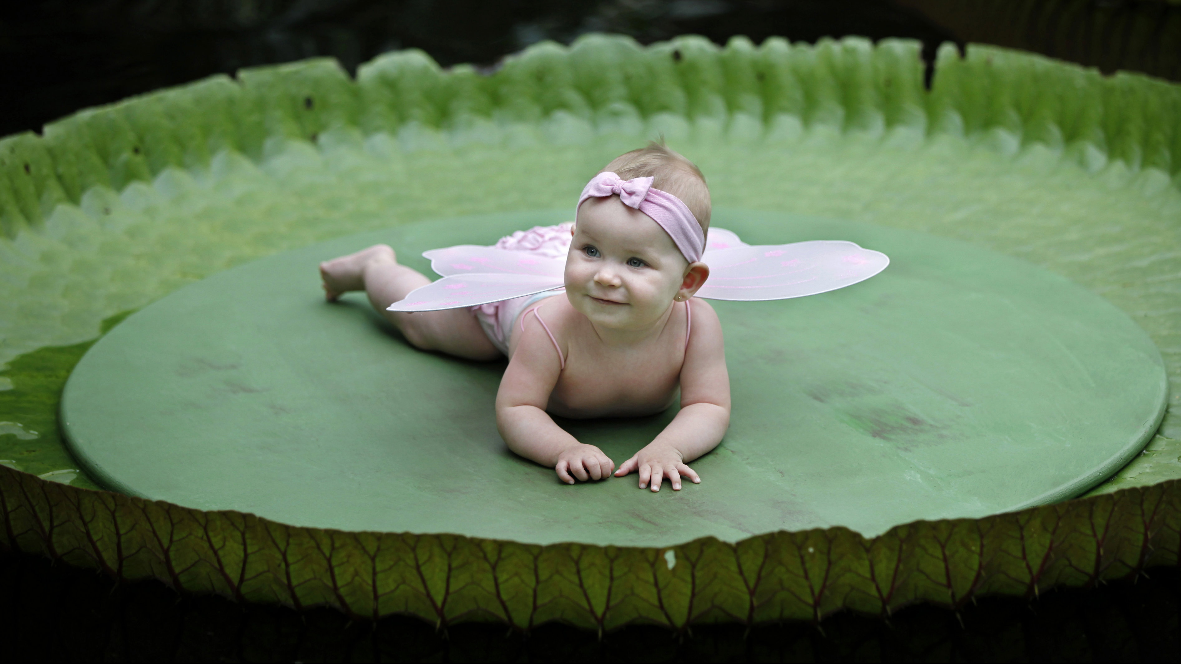 Seven-and-a-half-month old Tanisha Overbeeke smiles while resting on top of a leaf of the Victoria Amazonica at the Rotterdam Blijdorp Zoo September 1, 2010. Children could be photographed on top of the leaf, under the condition that they do not weigh more than 15 kg (33 lbs). The Victoria Amazonica blossoms over two nights producing flowers that are white on the first night, which then turn pinkish-red by the second night. Its leaf could have a diameter of up to two-and-a-half meters.