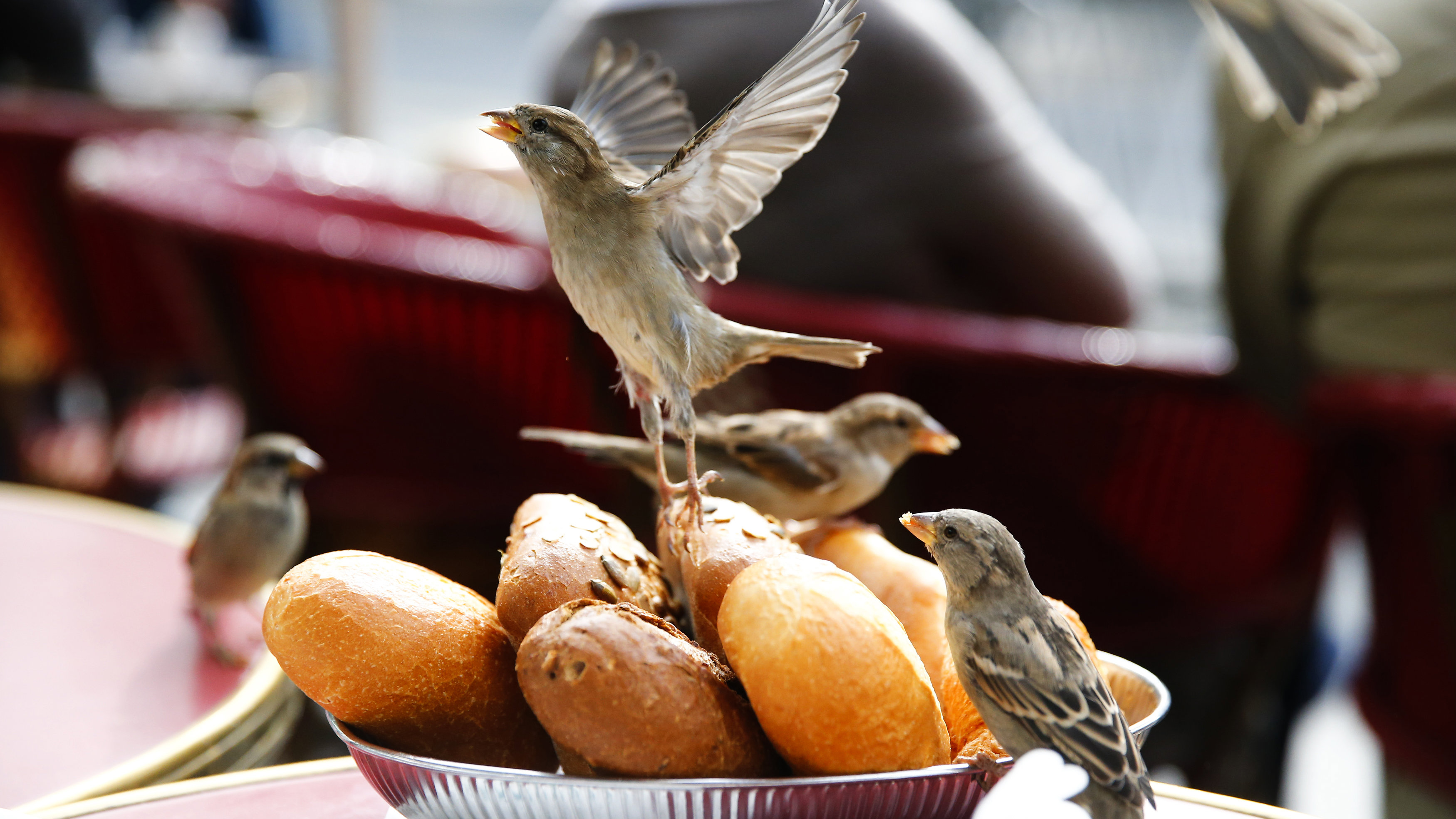 birds eating bread