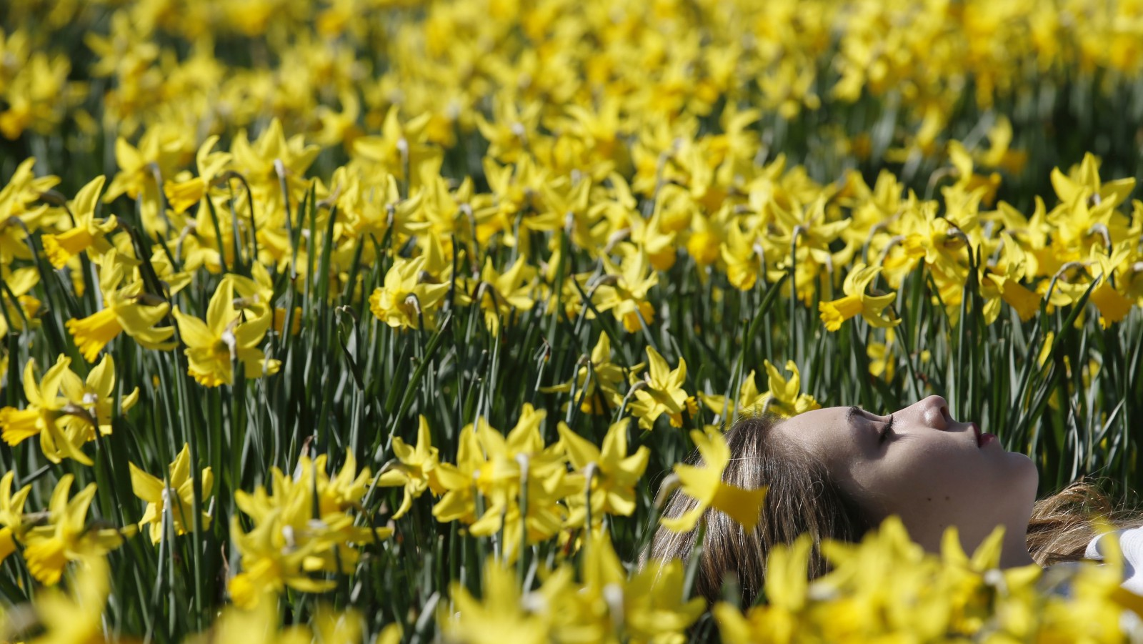 A woman rests among spring daffodils in the sun as the weather warms in London March 9, 2014.