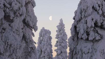 The setting moon is framed by snow-covered trees in Ruka.