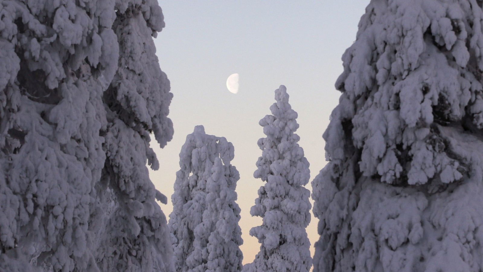 The setting moon is framed by snow-covered trees at the World Cup Nordic Opening event in Ruka ski resort near Kuusamo November 27, 2010.  REUTERS/Bob Strong (FINLAND - Tags: SPORT SKIING) - RTXV4JJ