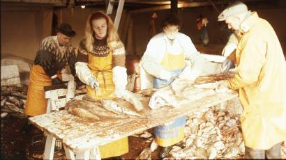 Workers processing fish in Reykjavik, Iceland, February 1971.