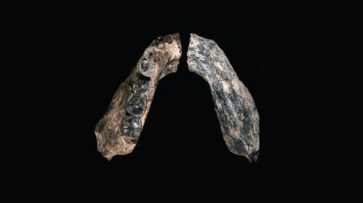 Fossilized jaw bone from Ethiopia