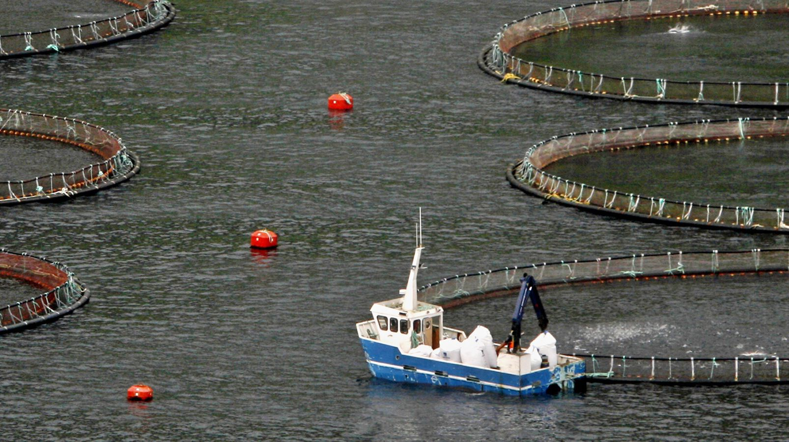 A salmon fish farm operates in a bay near the town of Vagur on Sururoy island October 17, 2007. REUTERS/Bob Strong