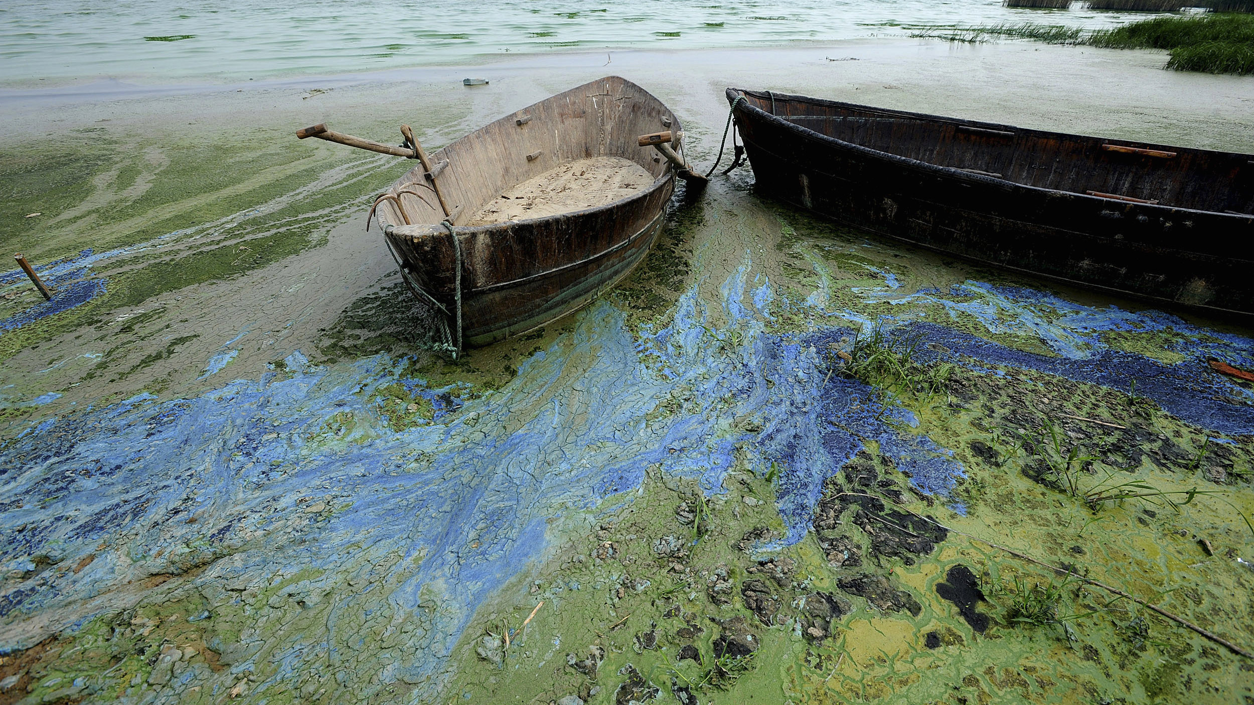 Boats sit on the bank of the algae-filled Chaolu lake in Hefei, Anhui province June 3, 2008. Chaohu, the country's fifth largest body of freshwater, was hit by a blue-green algae outbreak last summer, which endangered water supply in nearby cities and posed a great threat to aquatic life, Xinhua News Agency said. Picture taken June 3, 2008.