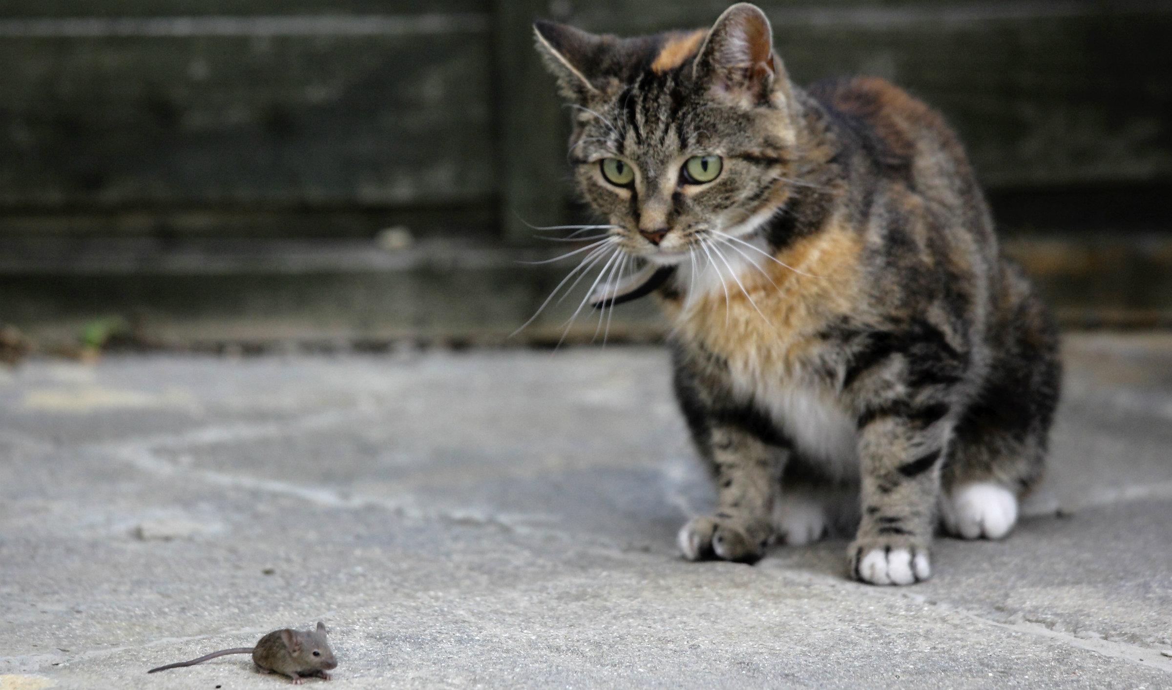 CAT MOUSE 2